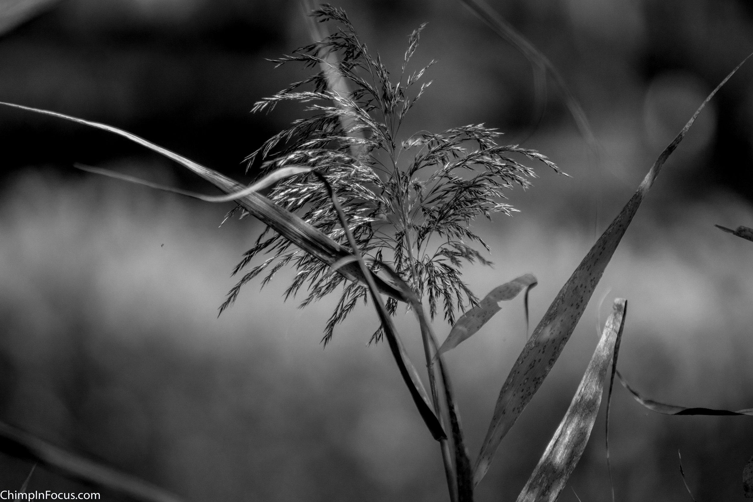 Field Flora (B&W)