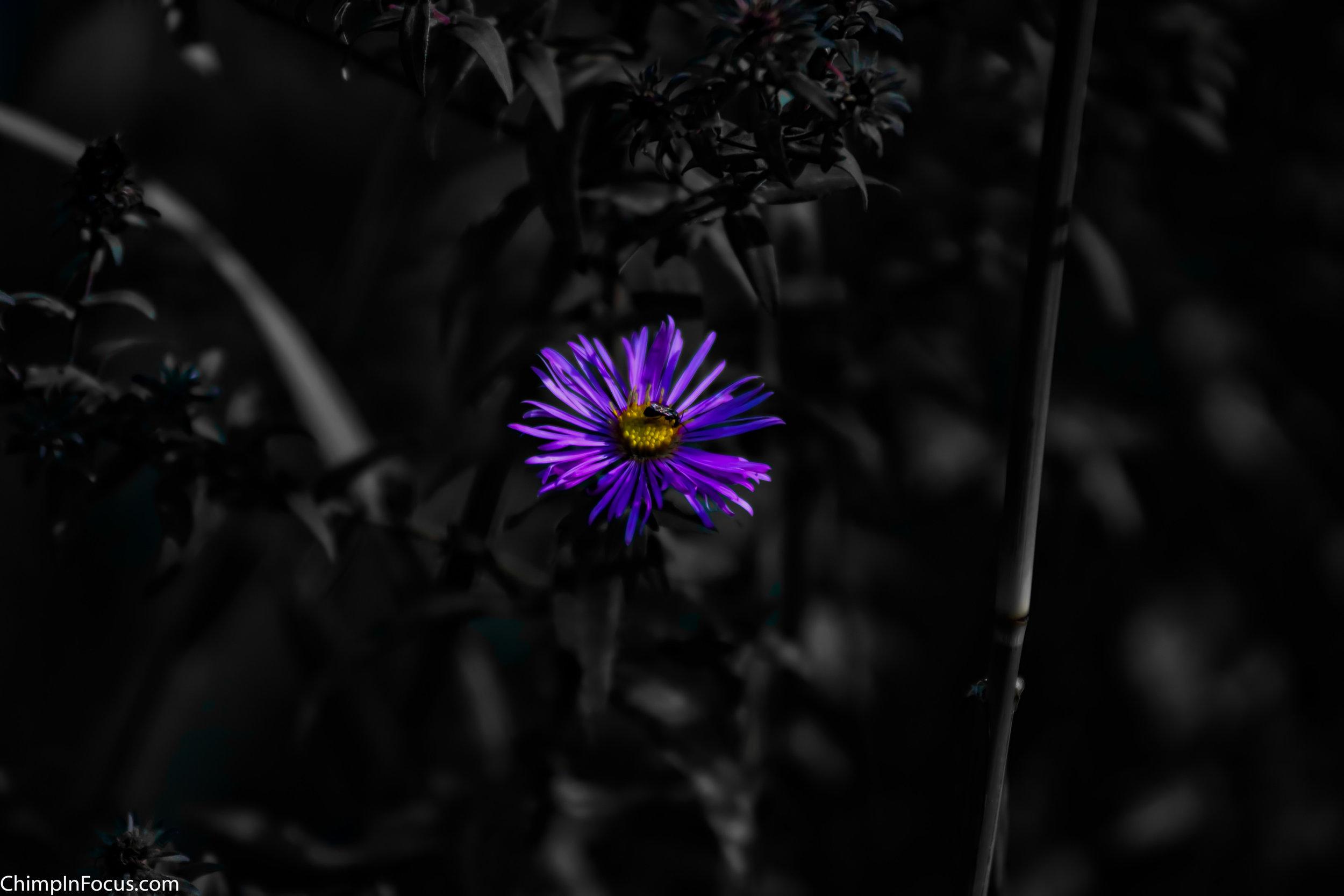 Lavender (Two-tone)