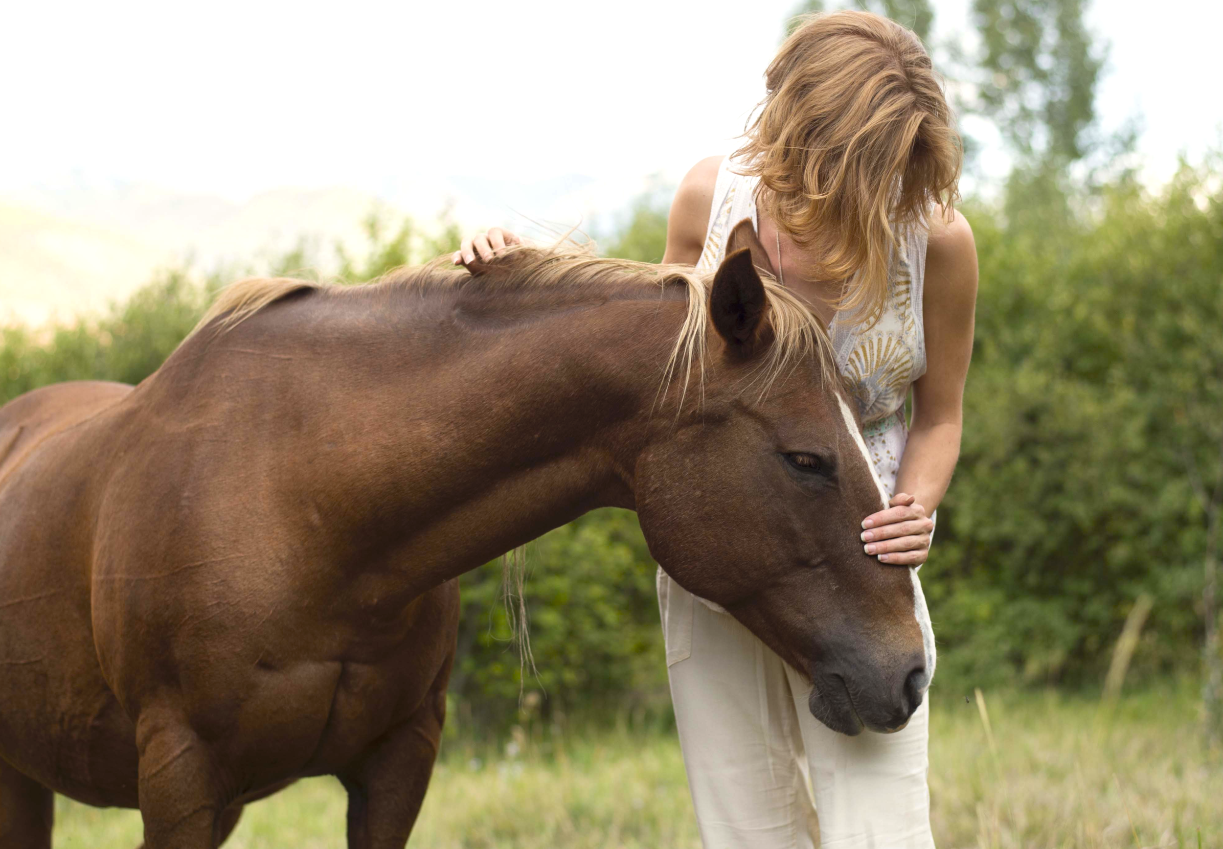 Horse love cropped .png