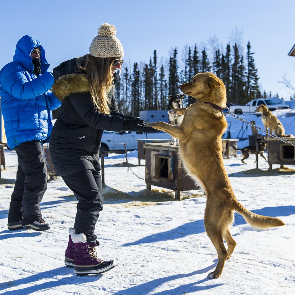 Dog Sledding -
