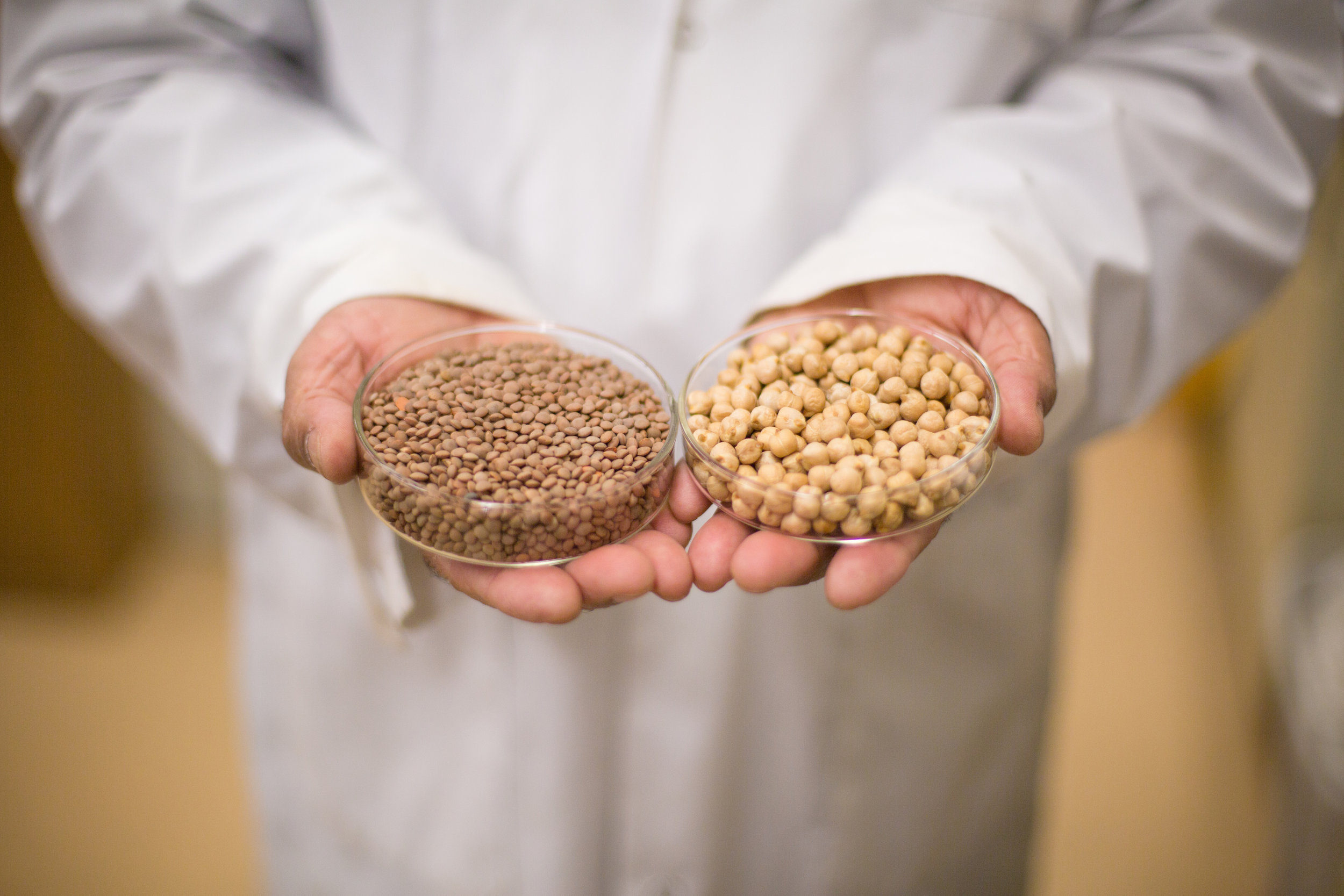 pulses-chickpeas-lentils.jpg