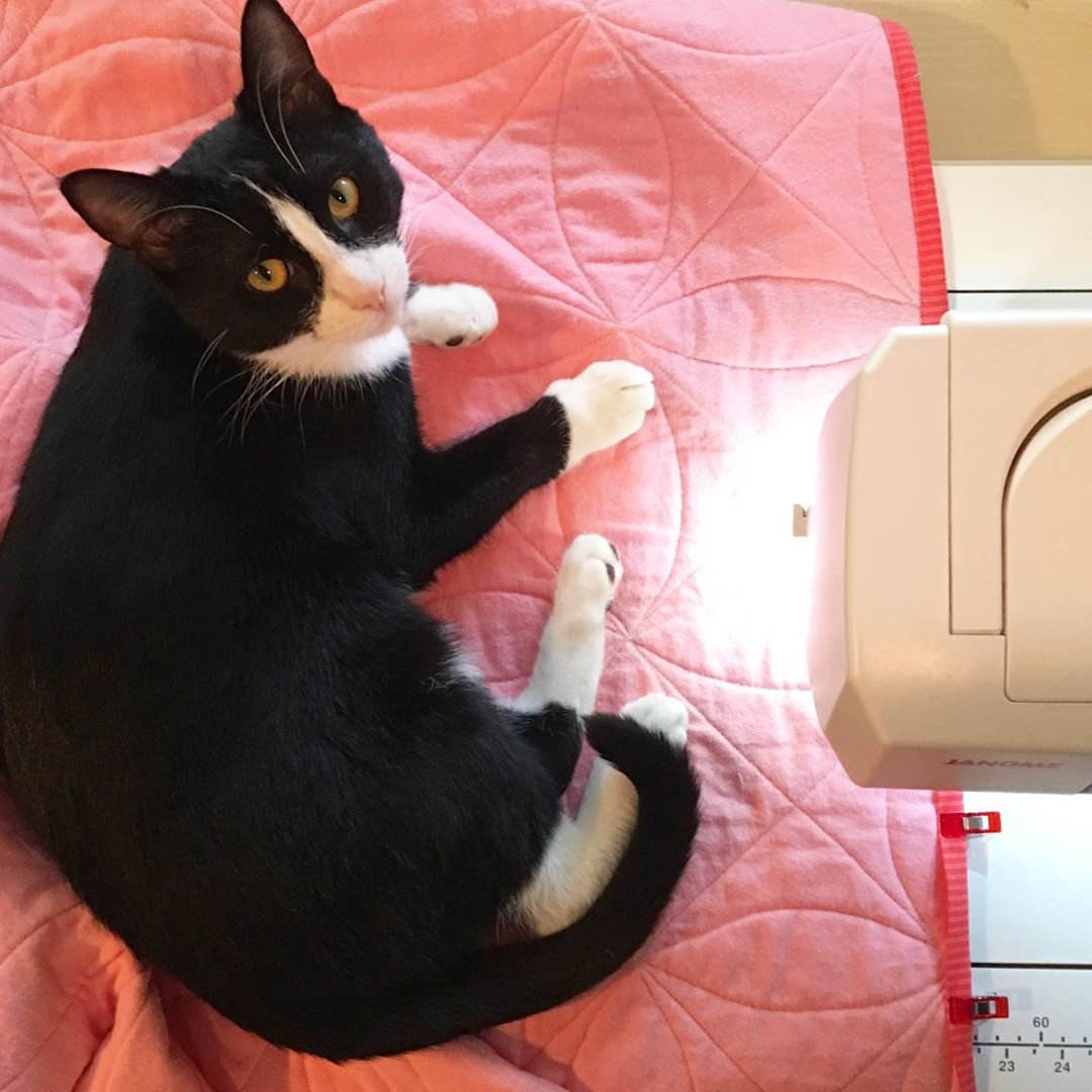 Tuxedo Kitten on Vintage Squares Quilt via www.helloquilting.com