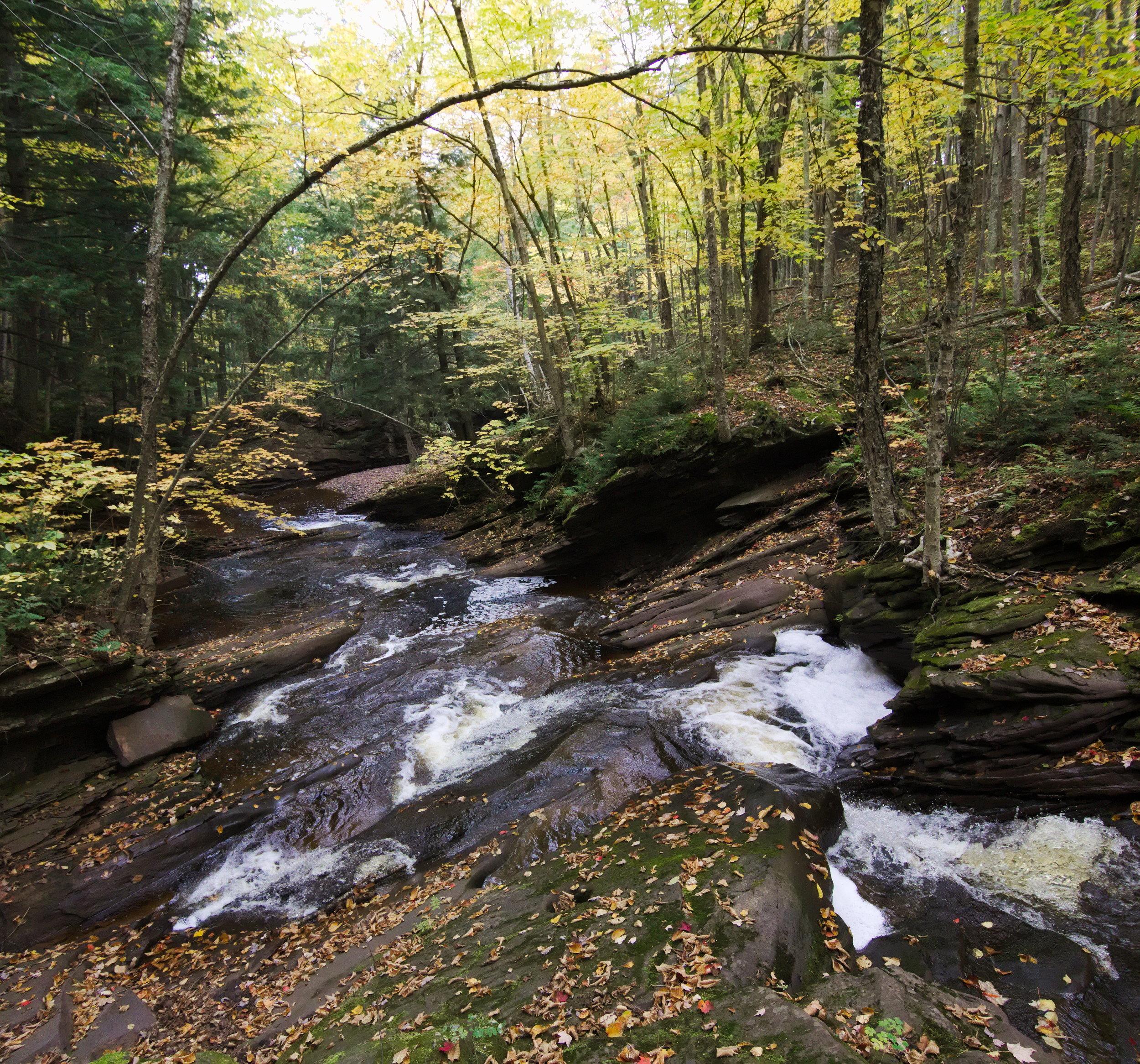 Maple Creek Yellow.jpg