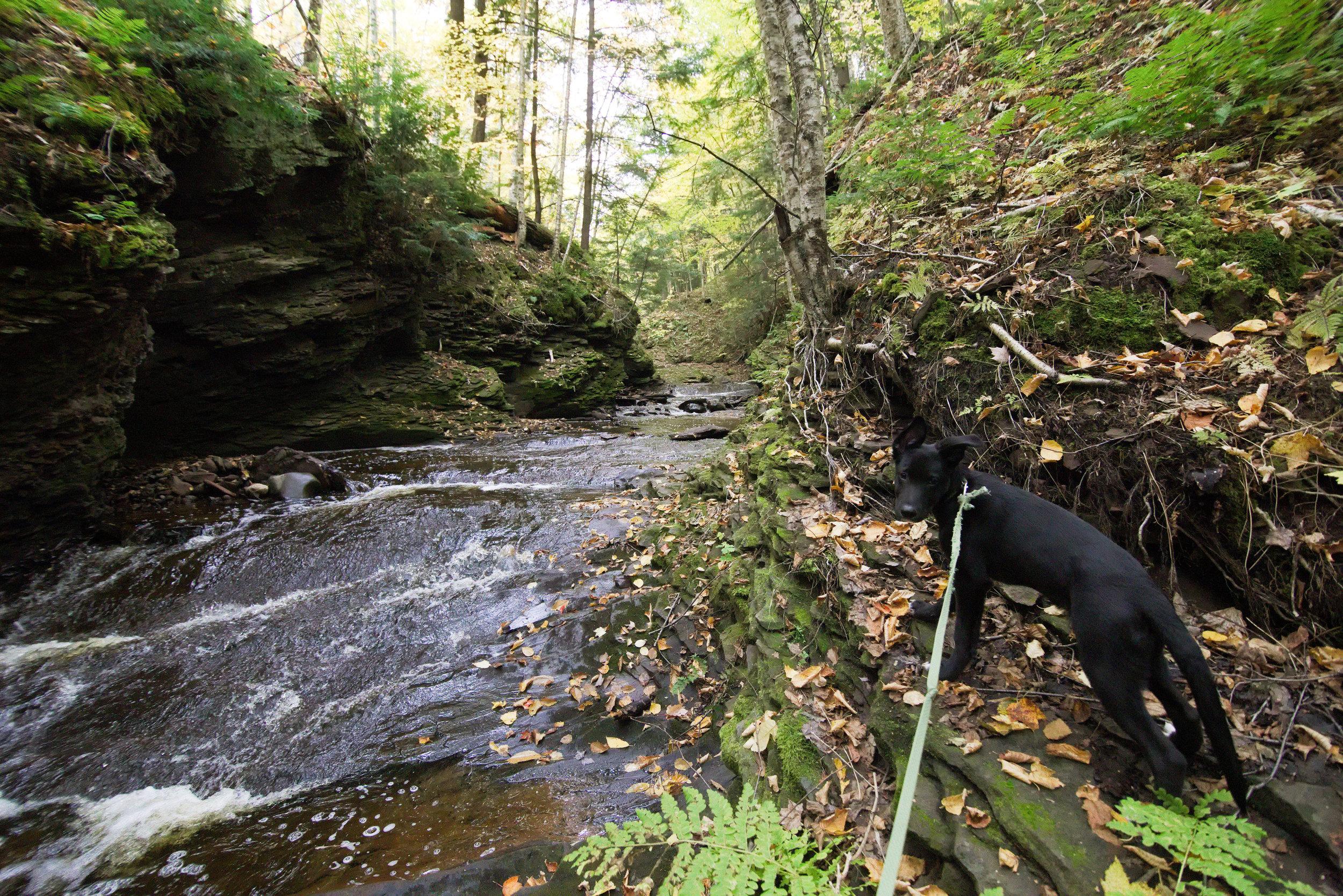 Oct 13 2017 Maple creek 4.jpg