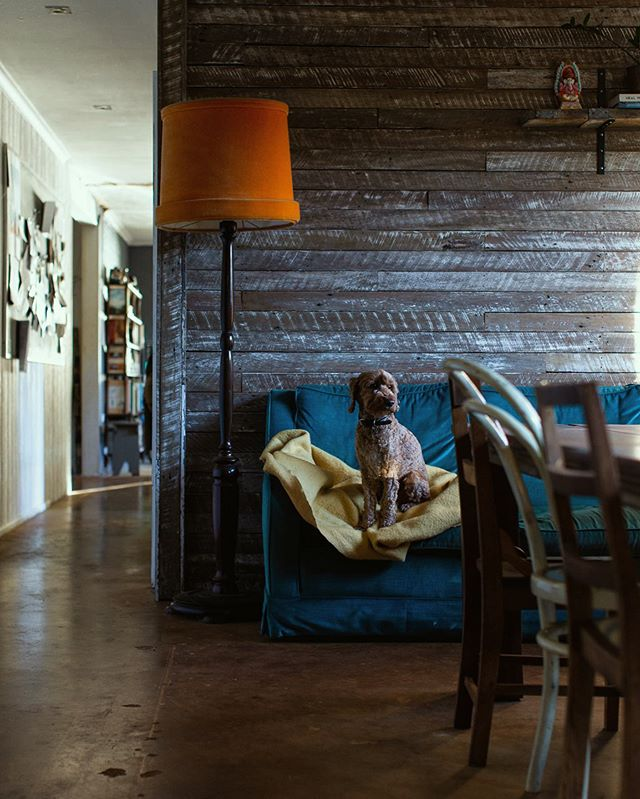 I know I have been spamming stories with Chewie lately but look at him? Sitting there perfect on our $20 velvet vintage lounge, which has seen better days since Chewie & Dexter (dog 1 of two & not in the picture) have claimed it as their hanging place. My sad attempt to save the velvet with a yellow  blanket doesn't really cut it either.  So the least I can do is taking a picture of Chewie.  Also, this is a subtle glimpse of our home is progress. (Yes, it's still in progress)  Might share more soon.  Have a sweet weekend everyone. Going to curl up on the lounge now with at least one of two dogs. . . . .  #kindlecuriosity  #folkandstory #littlestoriesofmylife #visualsoflife #visualpoetry #thatauthenticfeeling #beautifulmatters #lifefolk #daysofsmallthings #whimsicalwonderfulwild #weeklyfluff #spoodle #dogsofinstagram #slowdownwithstills #seekmoments #asecondofwhimsey  #moodygrams #interiordesign #interior #amomentofwonder #solebich