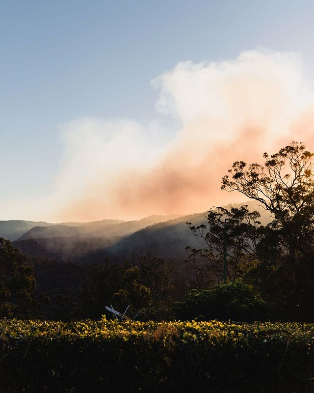 It's been a bit smoky up here on Mount Tamborine, our local brave amazing SES have been doing a controlled burn off, which is necessary to prevent uncontrollable fire in the near future.  We had no rain in ages & everything is so dry, it takes one spark and the dried out vegetation will be on fire.  Allan, who is 93 and lives across the road, said he has never seen this place so dry.  I take his word. Allan still works on his land, plants trees, nurtures his various orchids & mows his lawn. What a legend, but that's a story for another day!  Odd thing is, with all that smoke in the air, the light is almost like a permanent sunset. If it wouldn't be so serious it would be beautiful.  Take care everyone wherever you are in these strange odd times. It's been a bit much lately. . . . . . . . . . . . . . . #moodygrams #chasinglight  #views #myweekoninstagram  #chasinglight #littlestoriesofmylife #lifeunscripted #visualpoetry #livefolk  #livethelittlethings #fellowmag  #documentlife #posttheordinary #mytinyatlas #mytinymoments #wearegoldcoast #exploretocreate