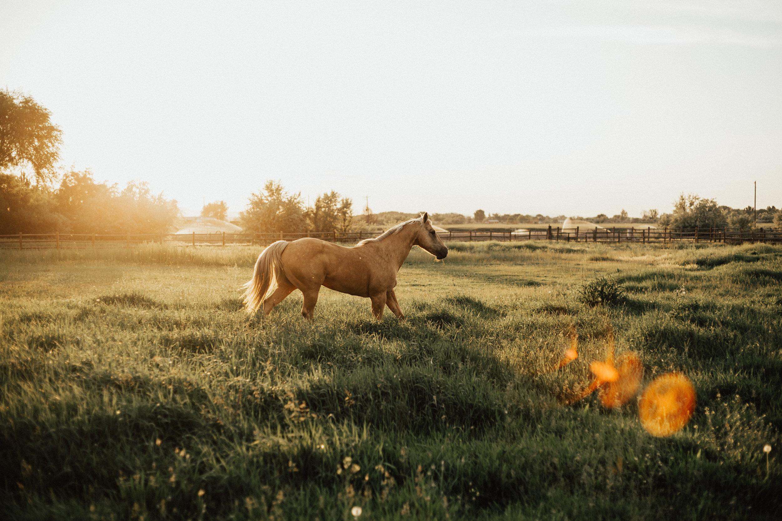 Western_Styled_Shoot-69.jpg