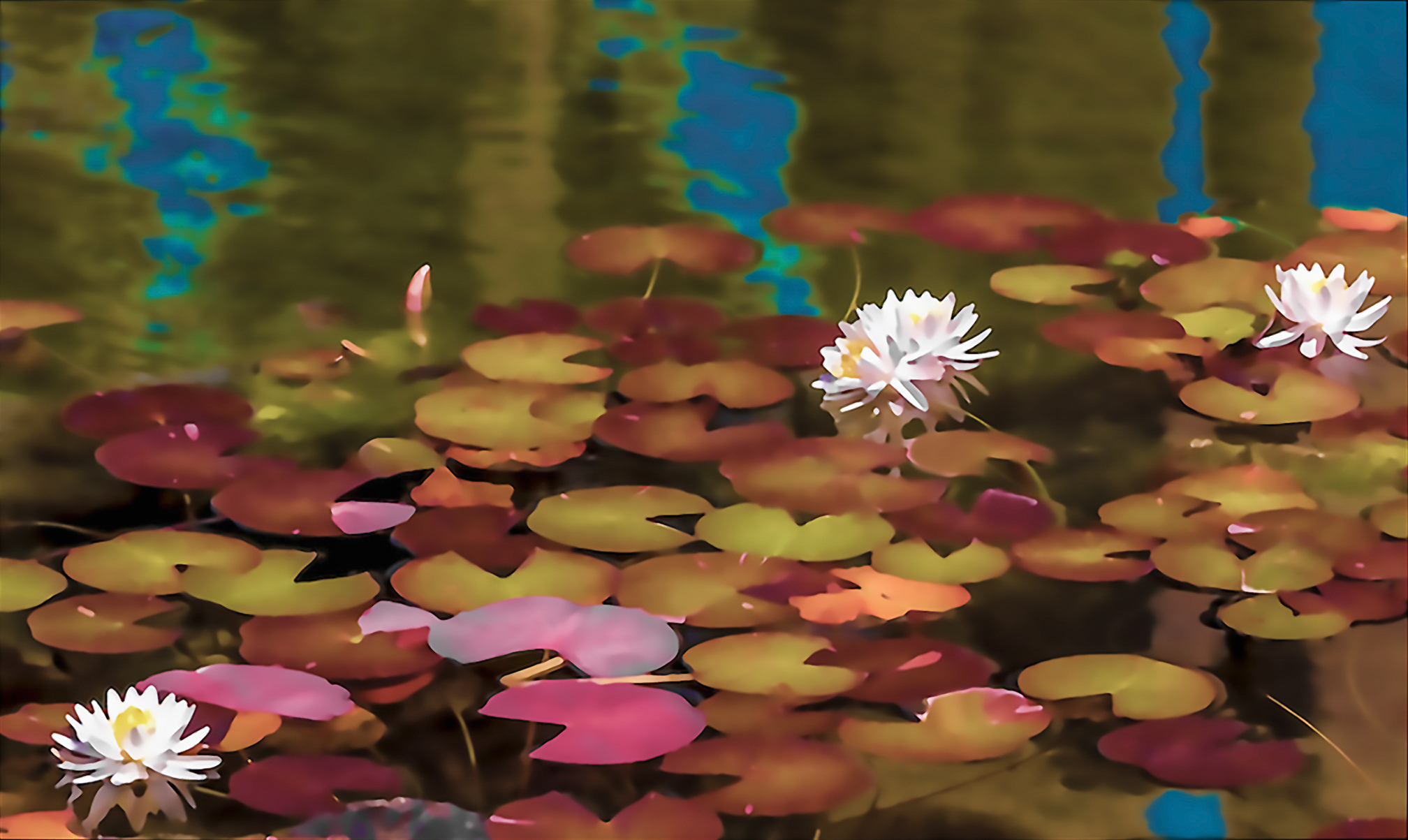 Water Lily (04)