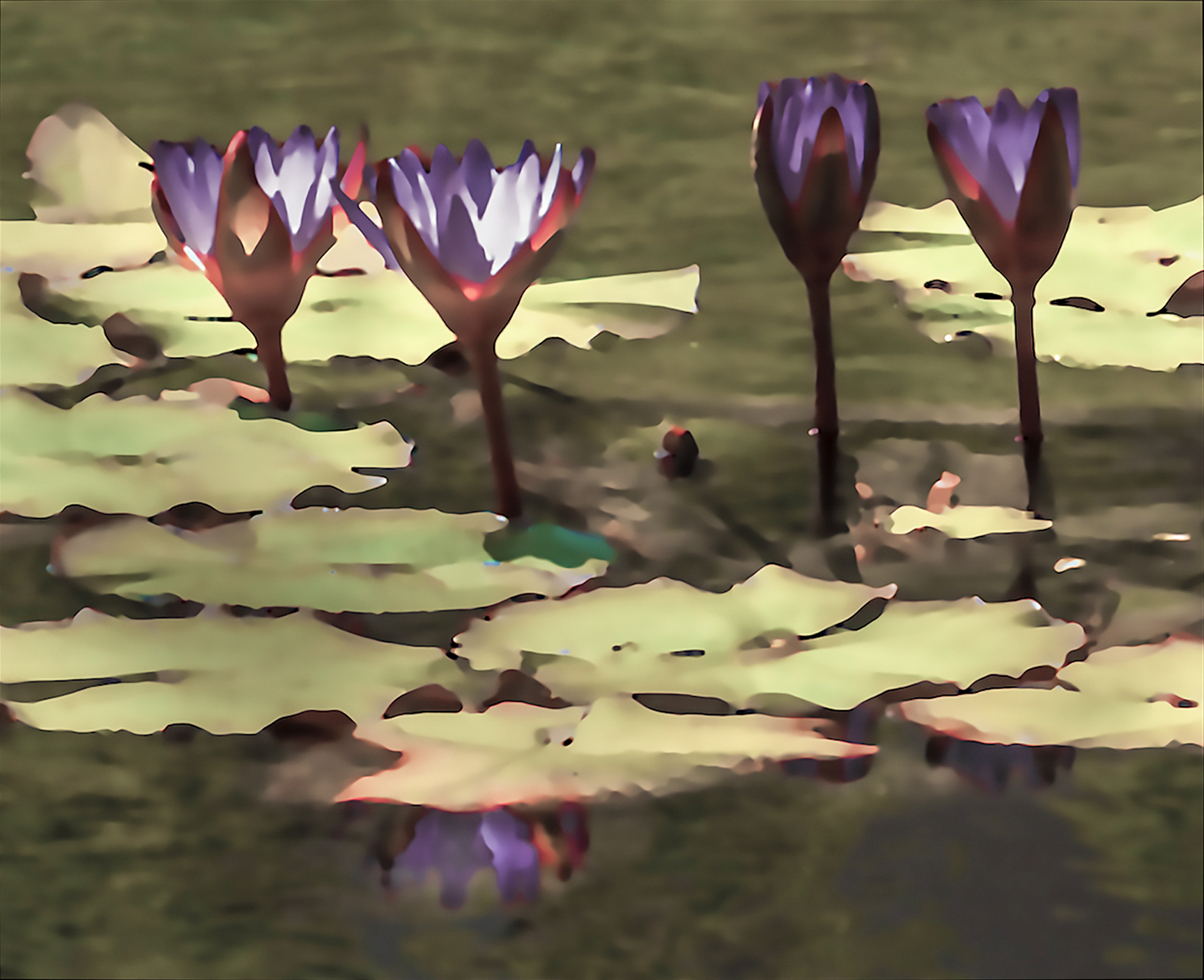 Water Lily (02)