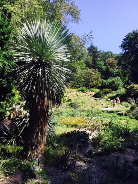Botanical Garden 8.jpg