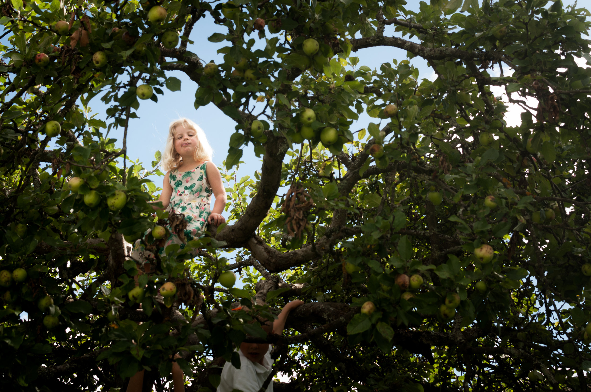 A girl sits in an apple tree and makes a funny face for the photograph.