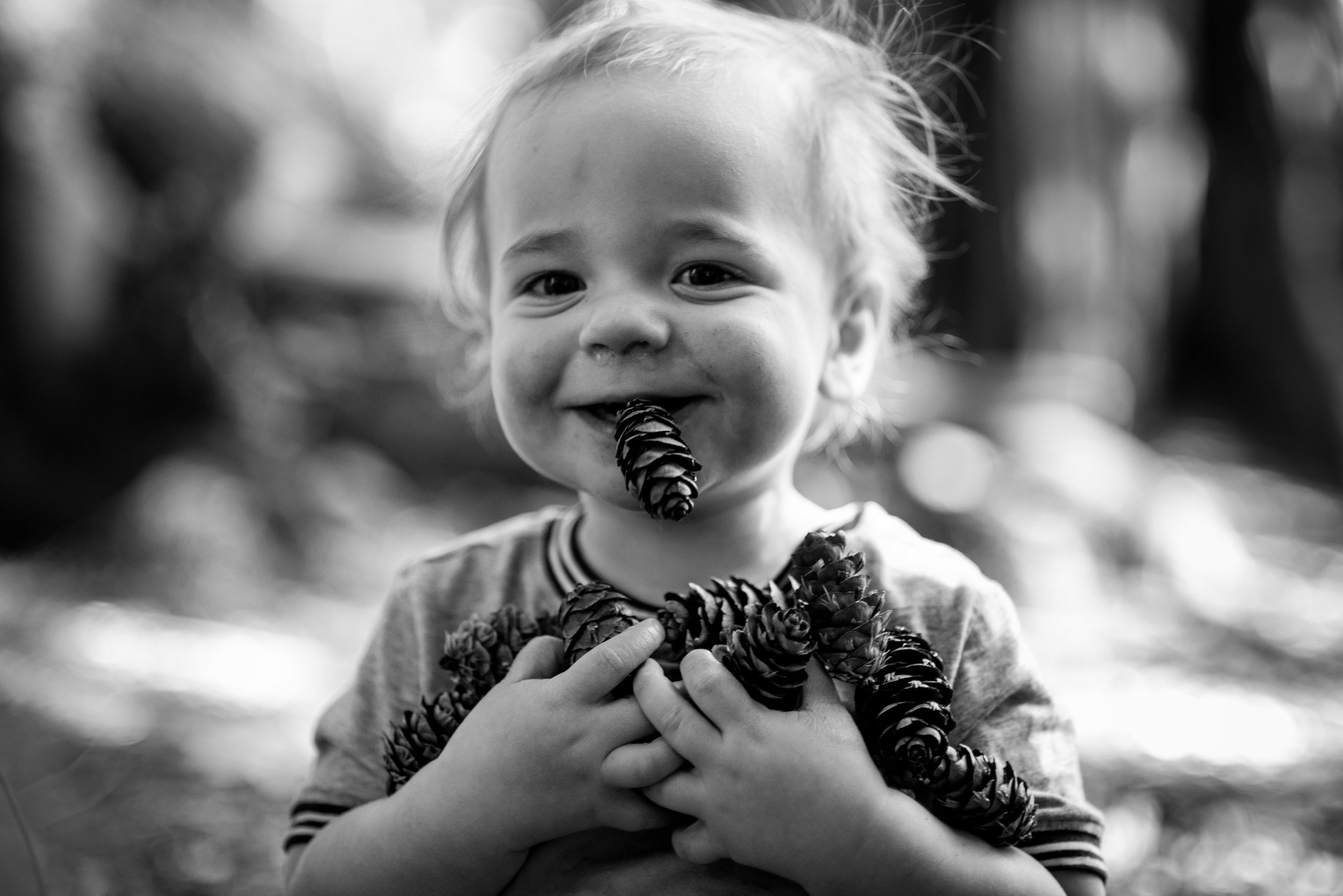 Child having a meal of pinecones in Burnaby, British Columbia.