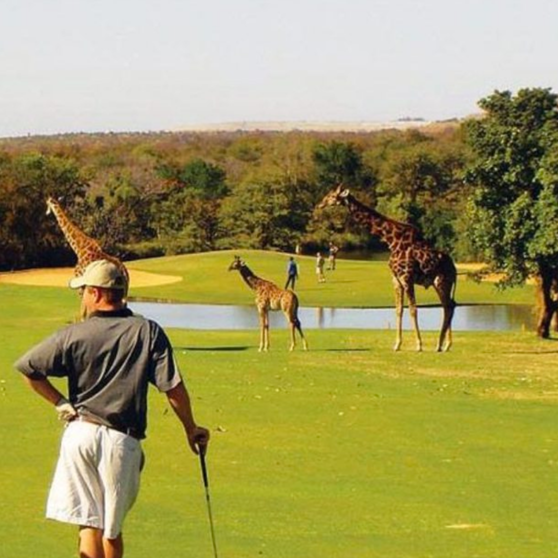 GOLF FALL 2019 - SOUTH AFRICA