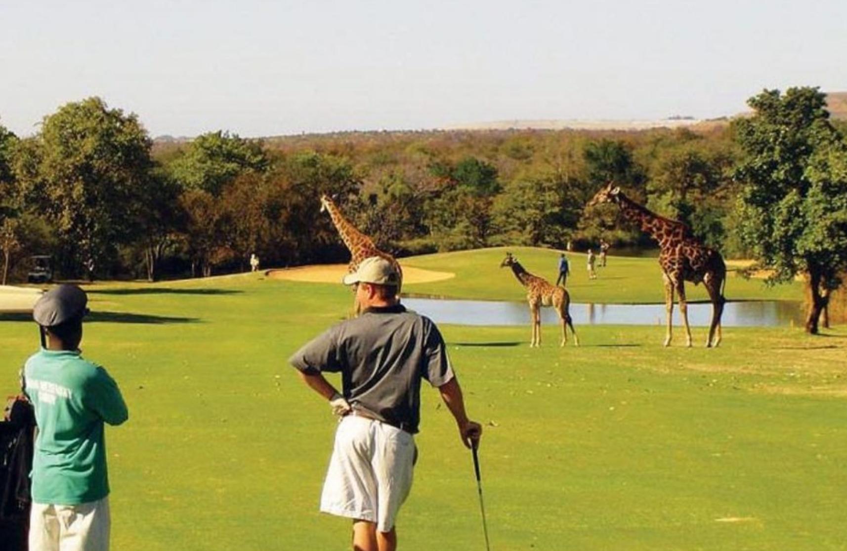 Golf Safari Pic 1.png