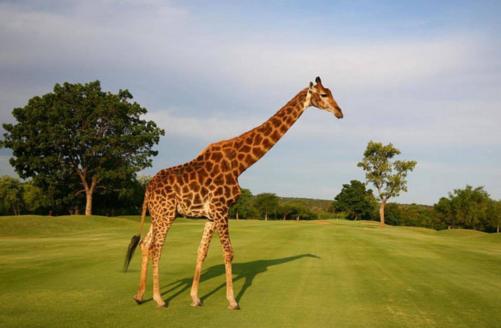Golf Safari Pic 2.png