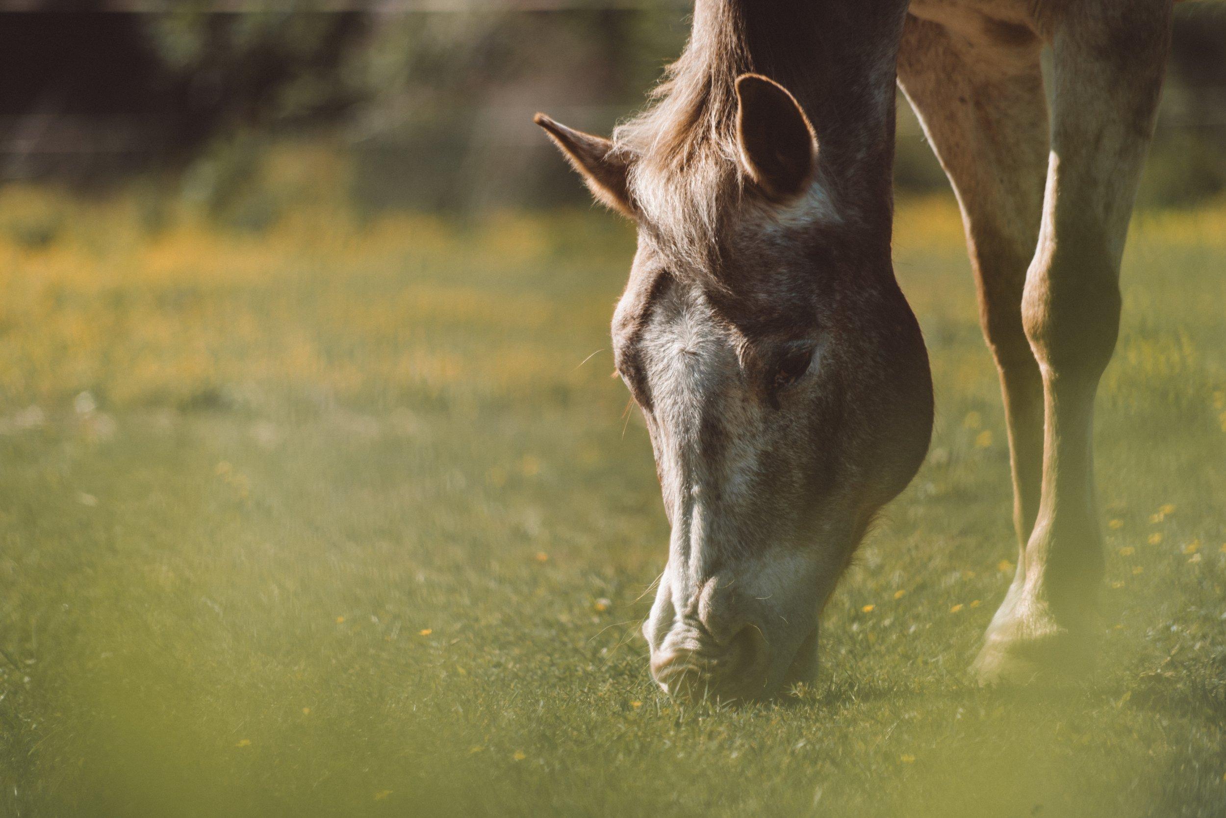 Un día entre caballos libres - Conoce una fundación que se encarga de cuidar y de la recuperación de animales maltratados o abandonados, ofreciéndoles un mayor bienestar... Pasearás por un parque natural para encontrar a las manadas de caballos y harás una visita etológica.Seguidamente, podrás disfrutar de una comida-degustación de productos locales, eco y de proximidad en una masía familiar de la zona.Precio: desde 35€ por persona