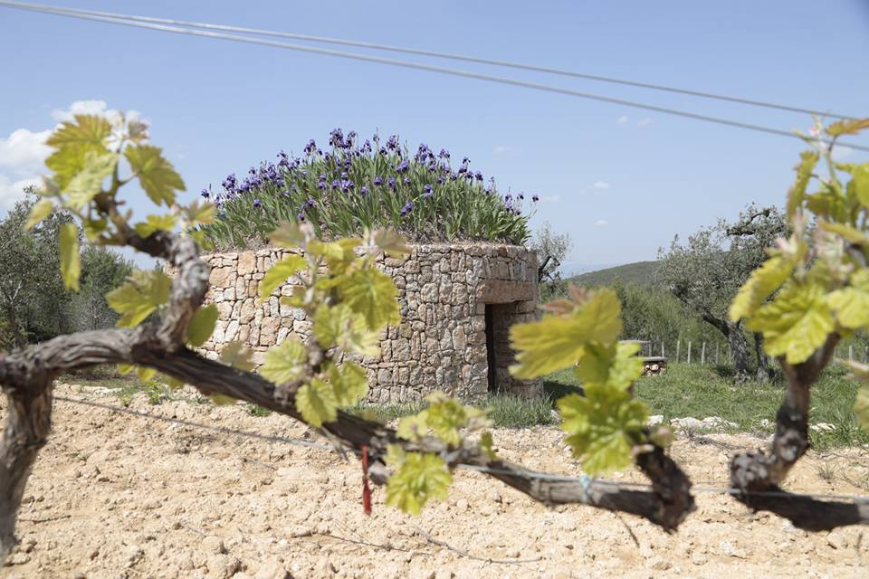 Dry-stone huts between vineyards - Live a unique wine tourism experience, mixing tradition and nature inside a dry-stone hut.This pioneering initiative reclaims the constructions used by the Penedès farmers from the XVIII century, adapted to the present time, with a 100% sustainable philosophy and responsible with the environment.We propose different options:1. Experience as a wine-maker. Price: € 202. Hiking among vineyards and huts. Price: € 303. Fly with ultralight. Price: from € 604. Spend one night in a hut with wine tasting and breakfast. Price: € 1505. Spend one night in a hut with wine tasting, lunch and dinner. Price: € 230Prices per person and minimum of 2 people