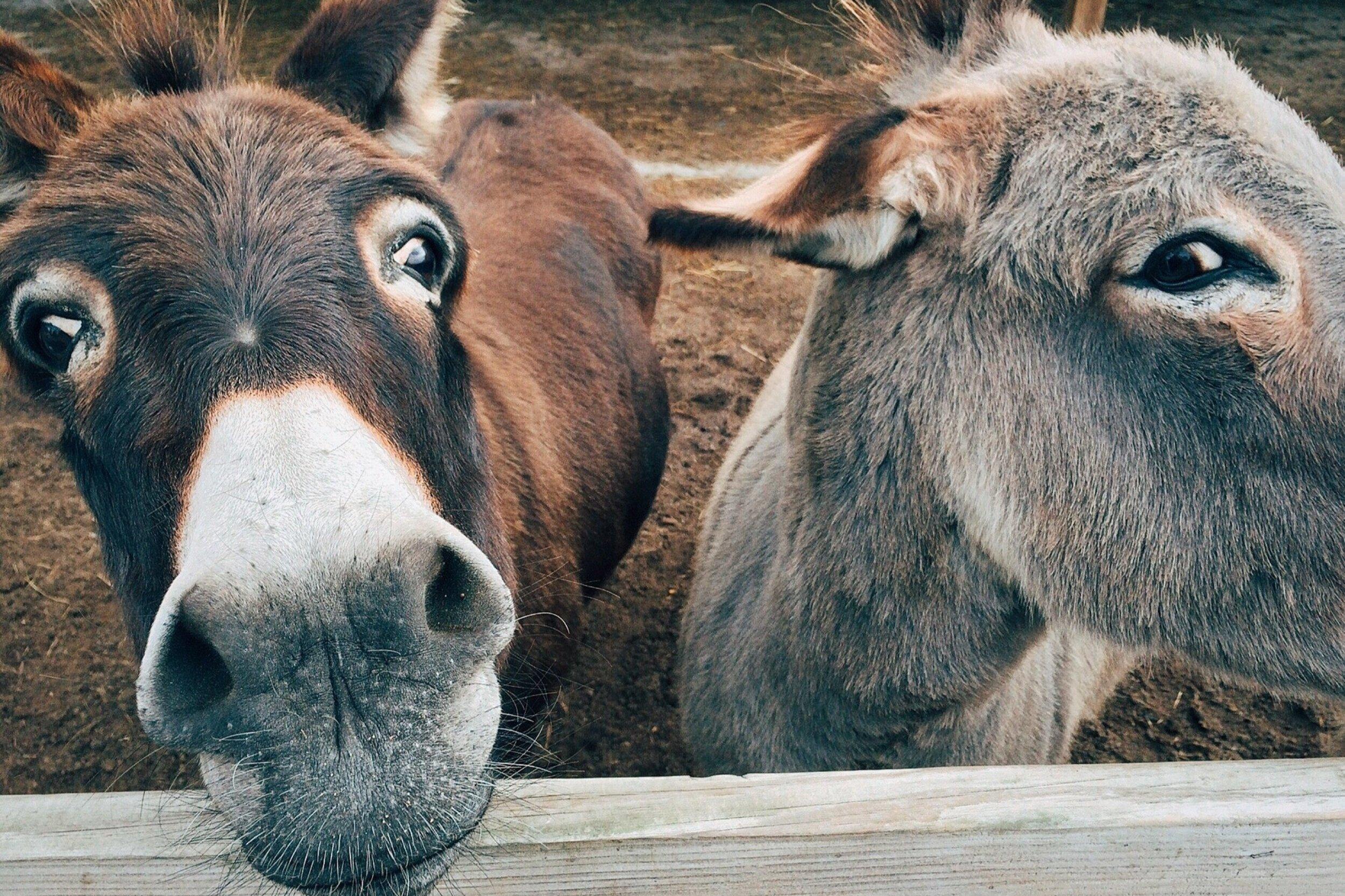 ANIMALES / ACTIVIDADES CON PERROS - Selección de experiencias con animales: actividades con perros y en granjas locales