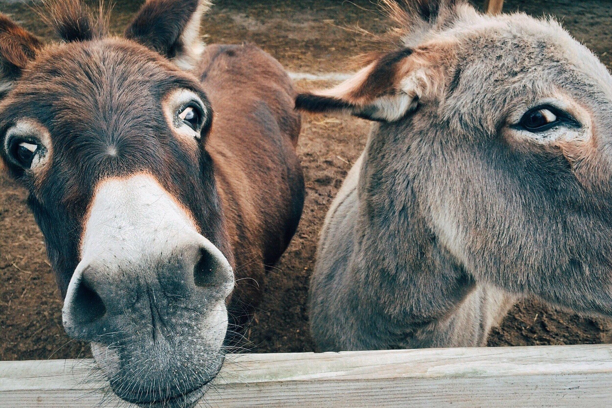 ANIMALS / ACTIVITATS AMB GOSSOS - Selecció d'experiències amb animals: activitats amb gossos i en granges locals