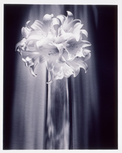Vintage Platinum print 'White Knights' circa 1990s