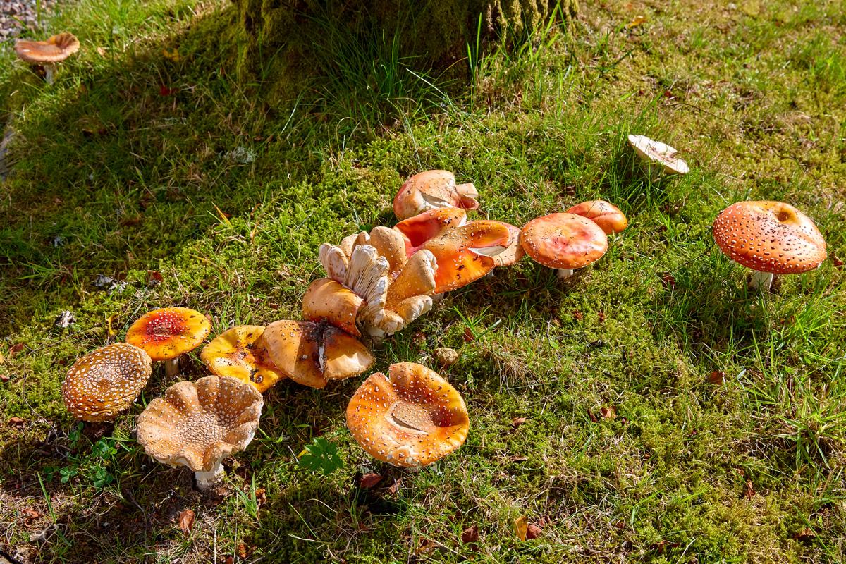 Mushrooms017HOLM_BLOG.jpg