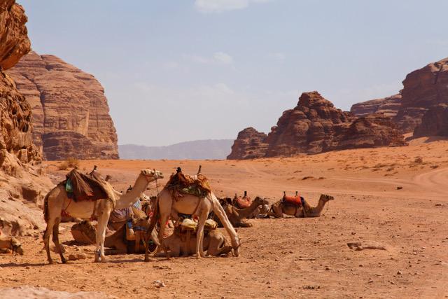 Wadi Rum camels.jpeg