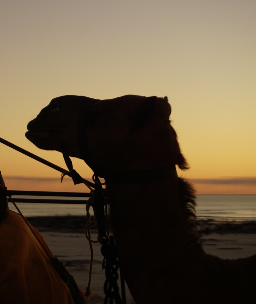 Camels_2.jpg