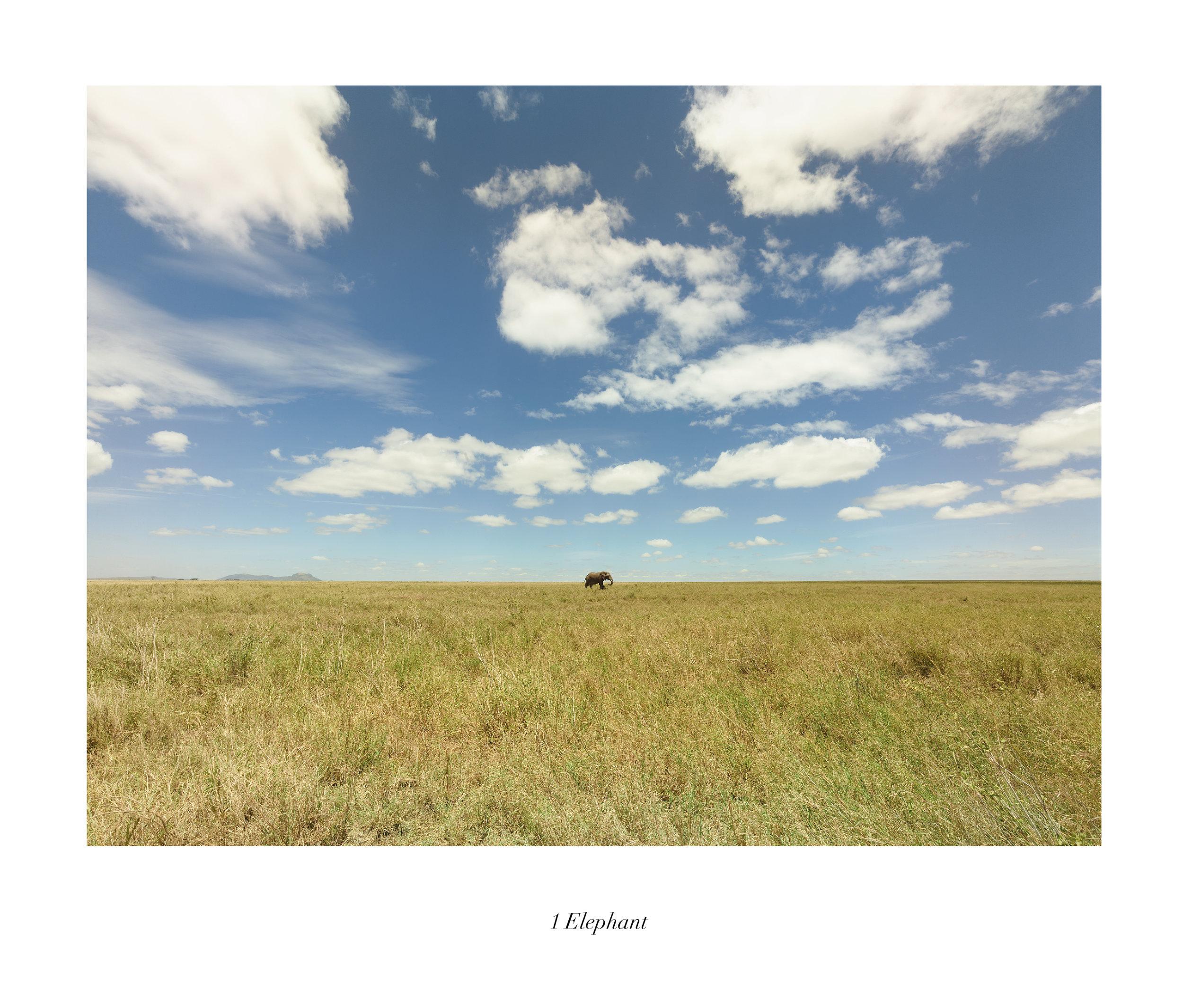 Serengueti (TAN 9.2)t