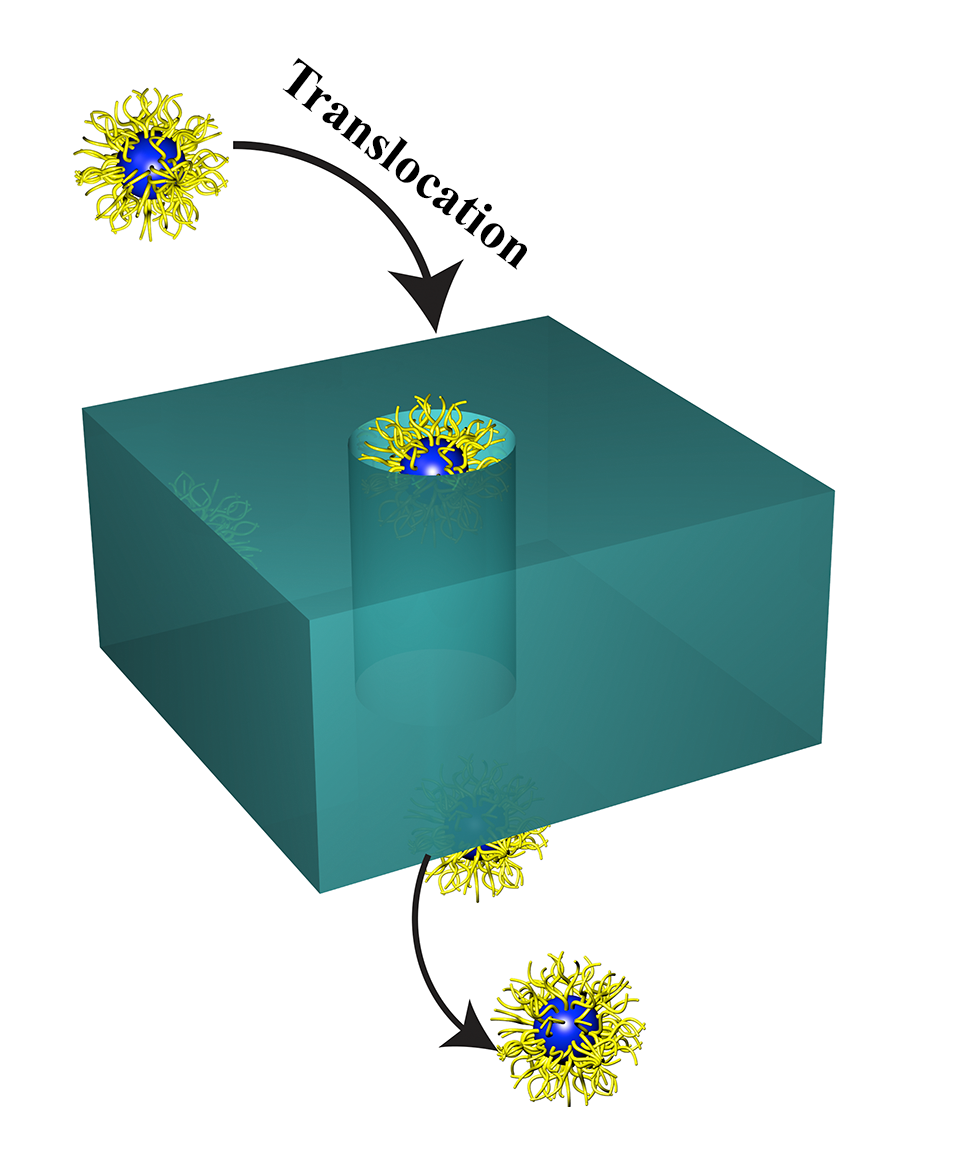 Nanoparticle Transport & Translocation. -