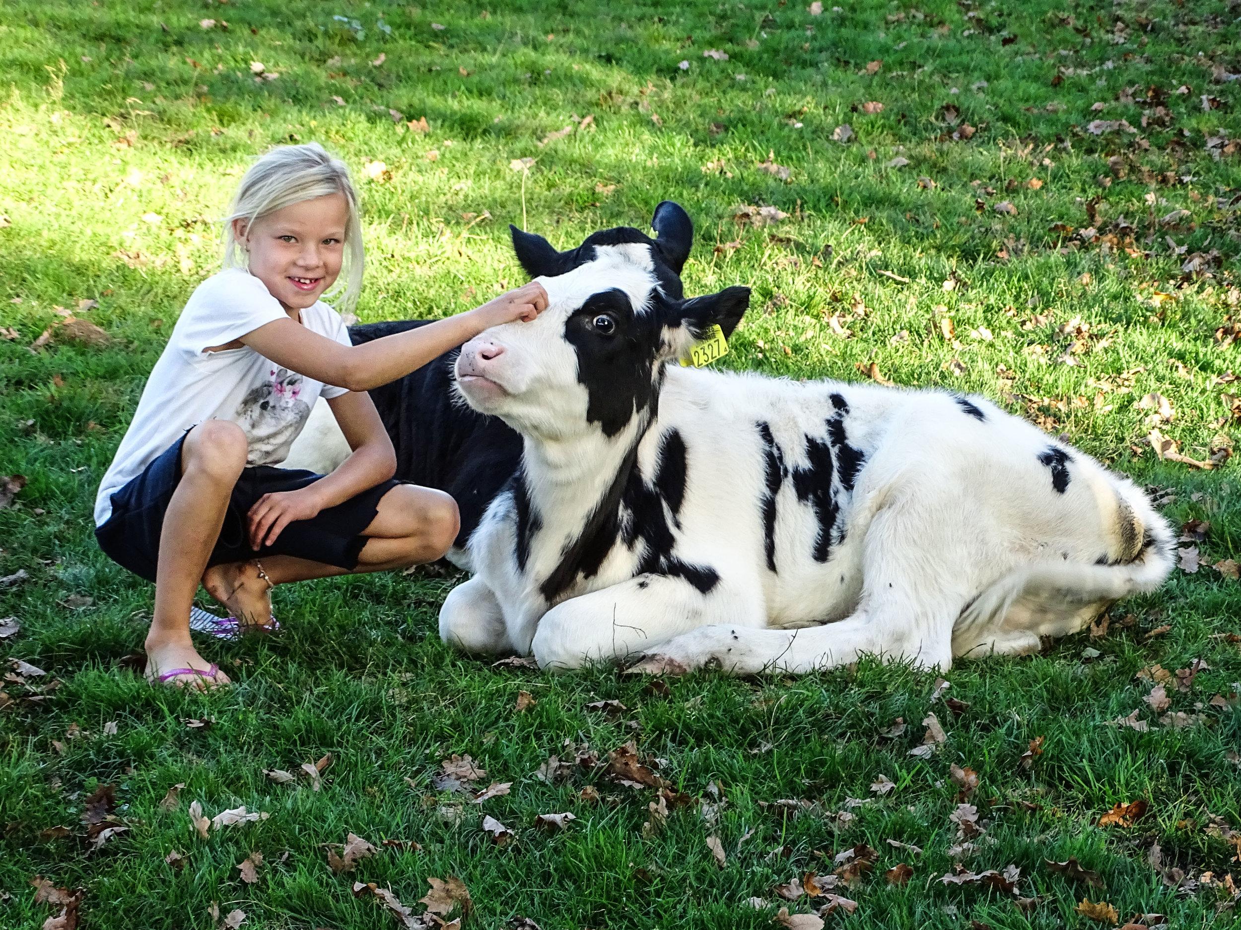 boerderijcamping-de-mebel-meisje-met-kalfje.jpg