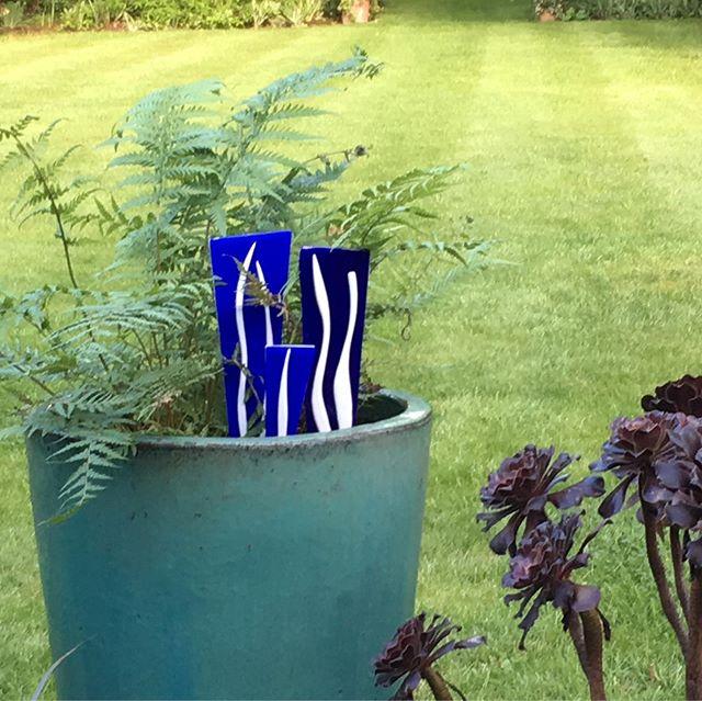 New garden range to cheer things up in winter pots!
