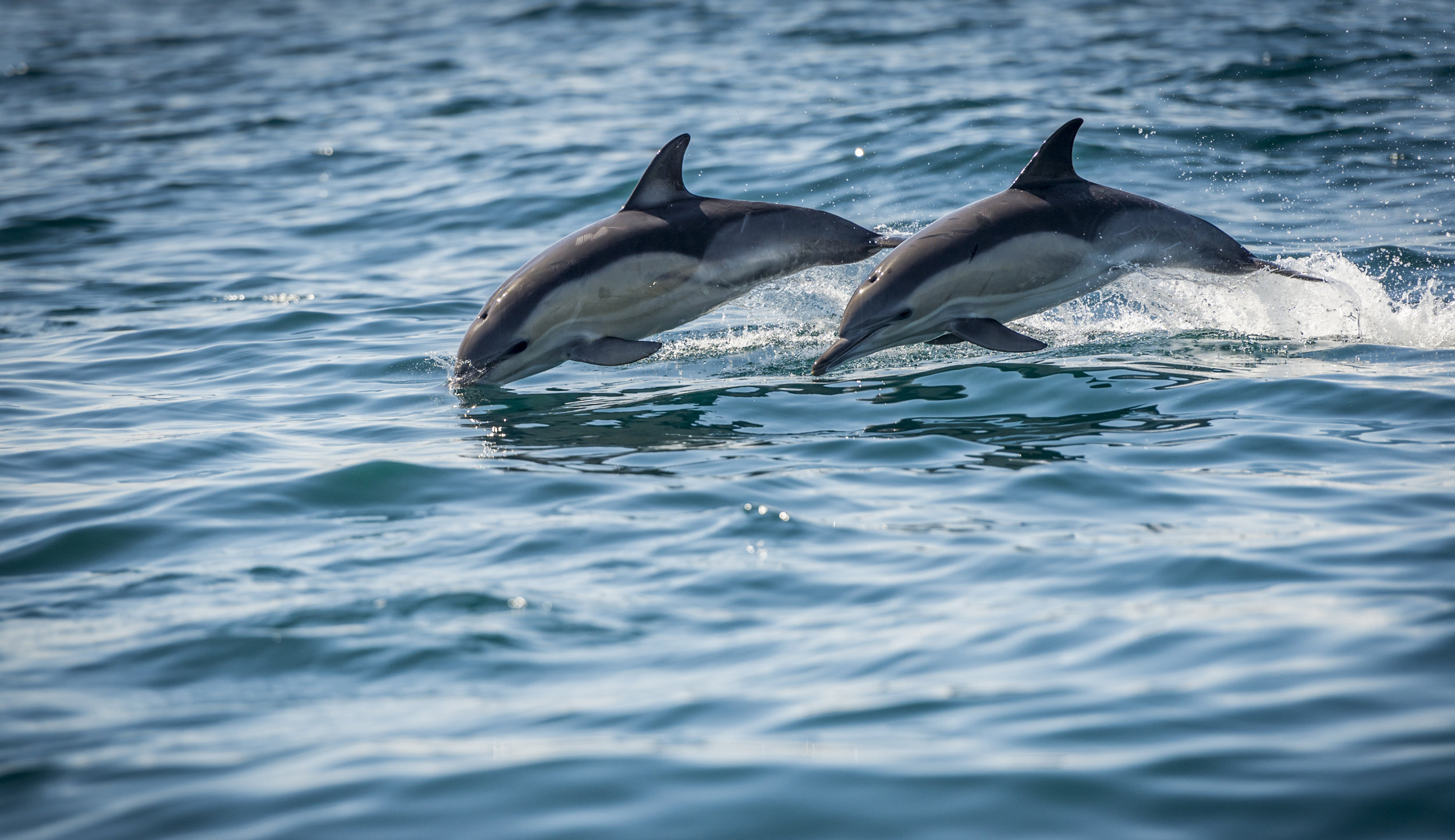 Dolphins  (1 of 1)-crop.jpg