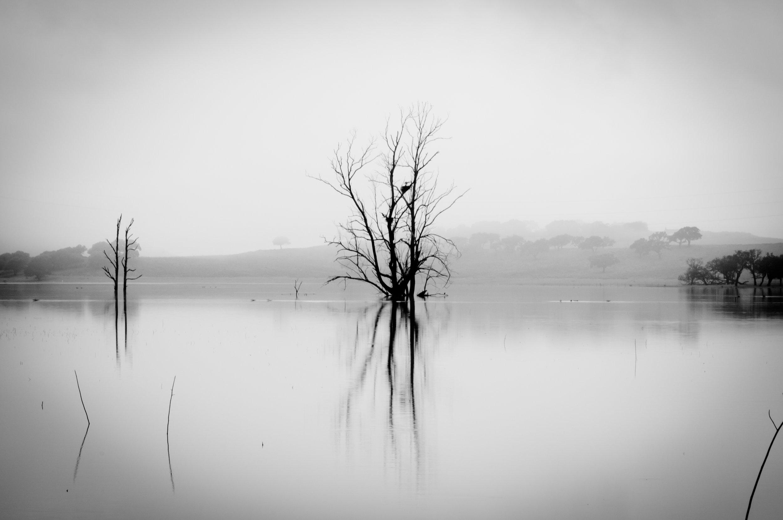 Mystery Tree.jpg