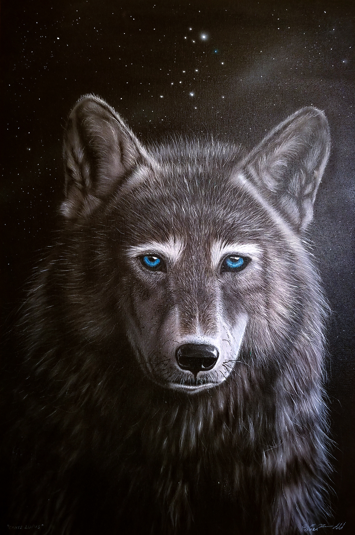 """""""Canis Lupus"""" - Acrylics on canvas"""