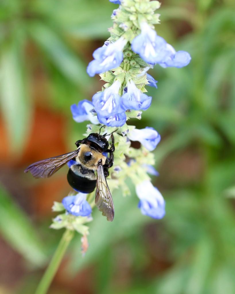 Bees - 3.jpg