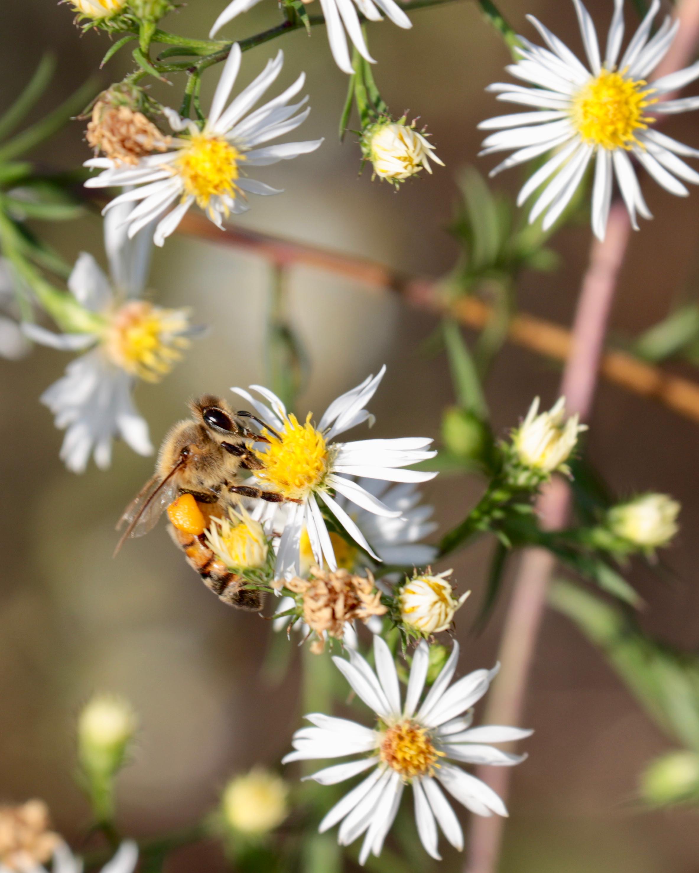 Bee - 1.jpg