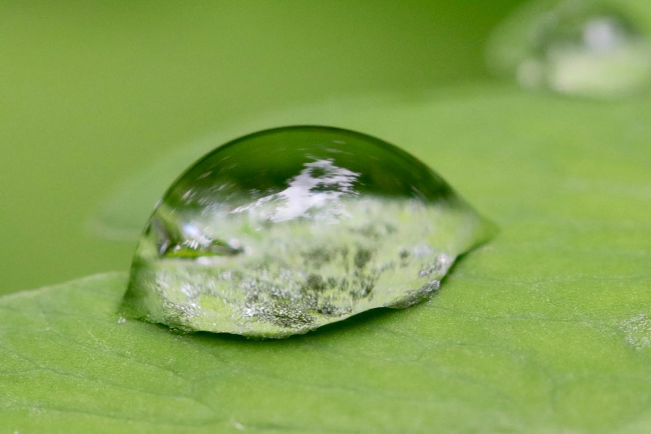 Rain drop on fern