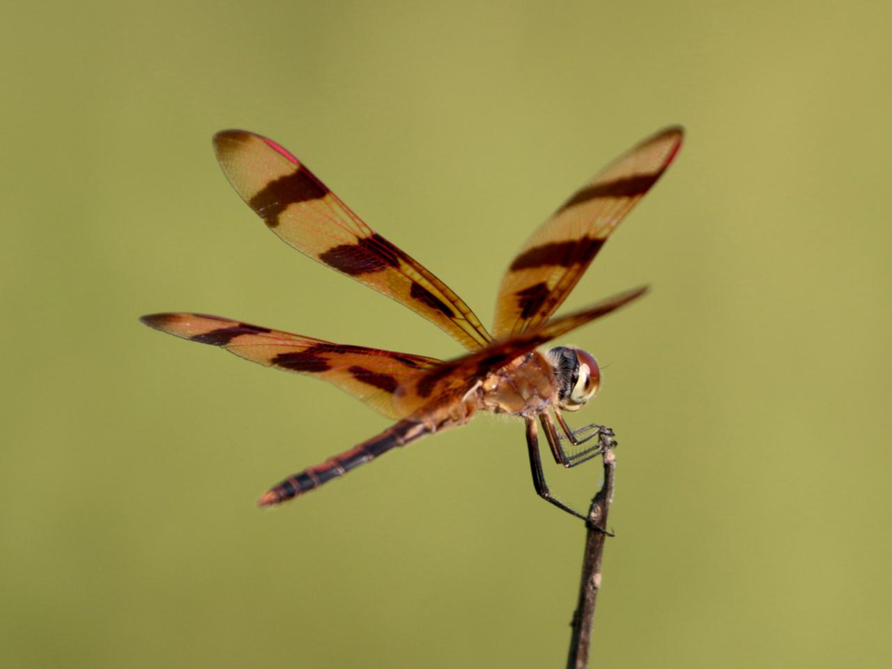 Dragonfly (2).jpg