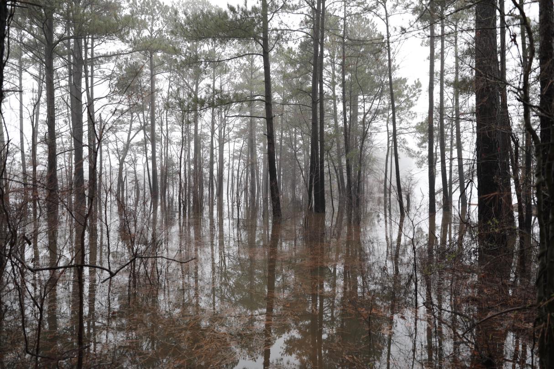 Jordon Lake in Fog