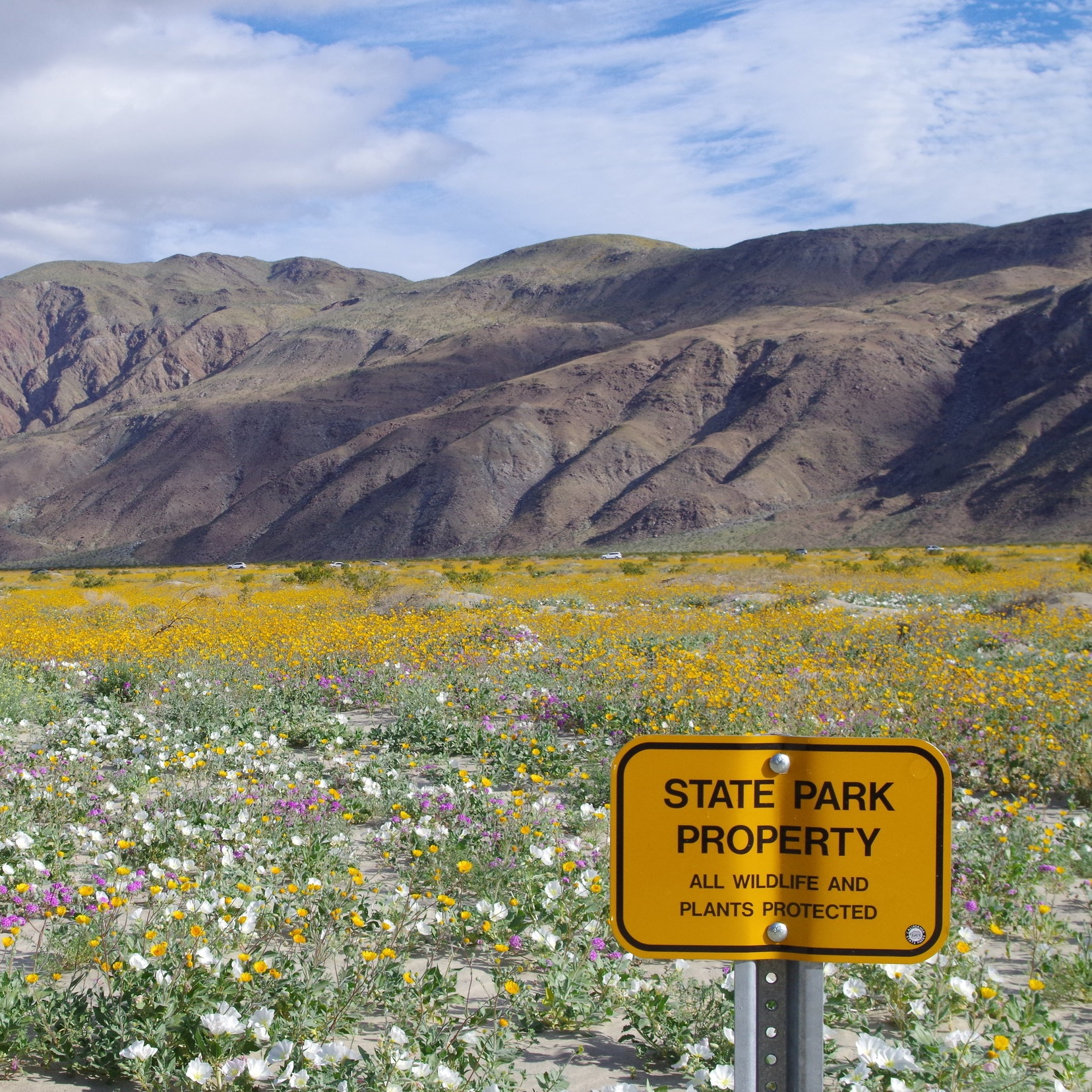 Anza-Borrego+wildflowers.jpg