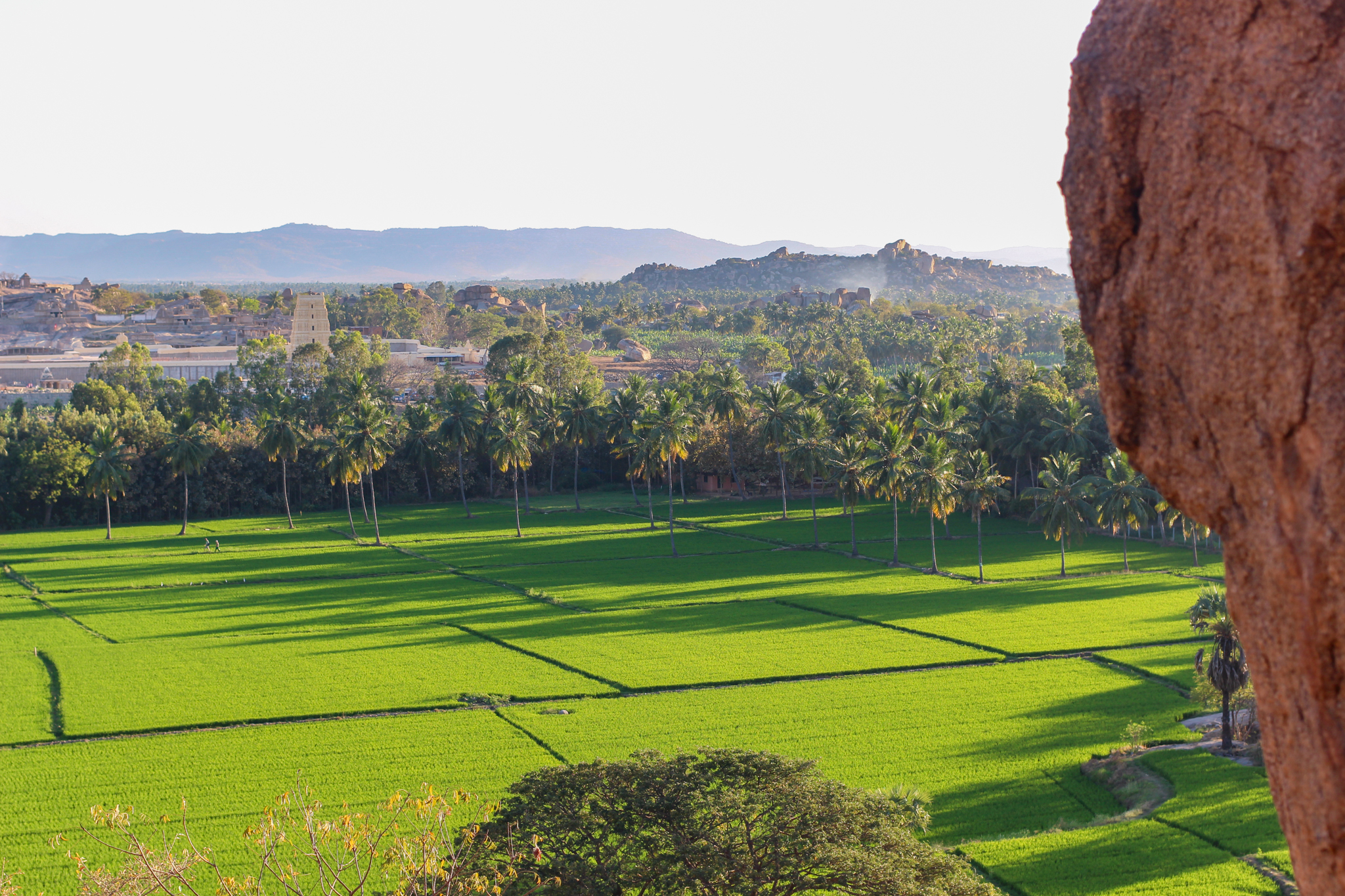 Stunning green rice fields and Virupaksha Temple in the distance, as seen from Sunset Point on Hippy Island