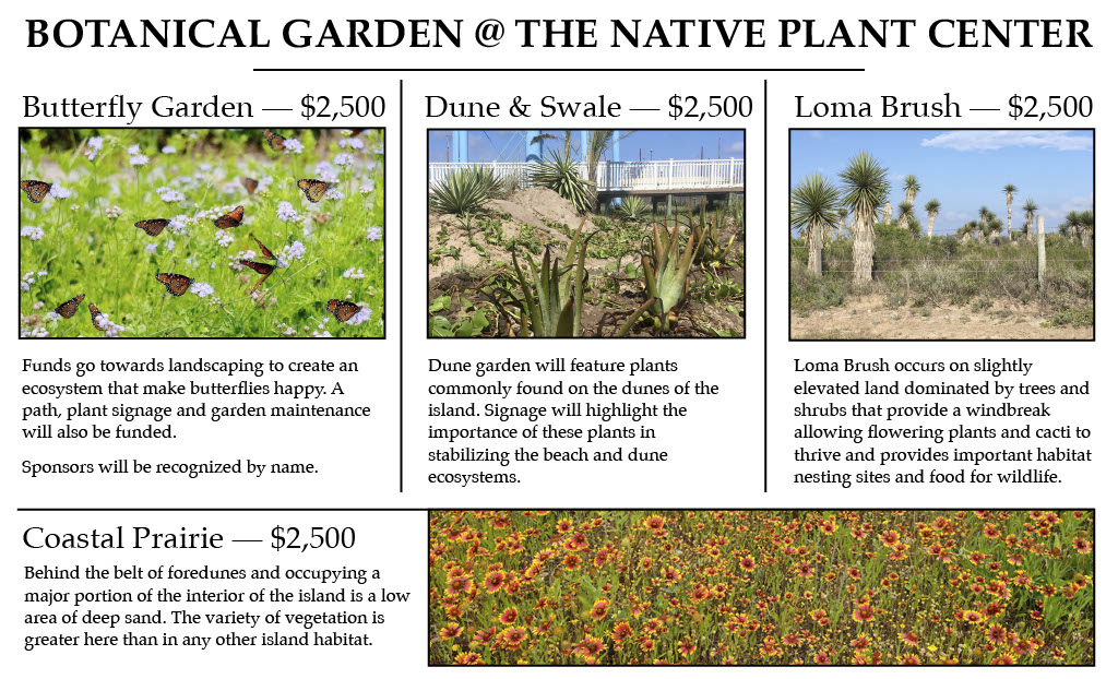 Chose from Native Plant Gardens (above) or our Tropical Palm Garden all @ $2,500 each.