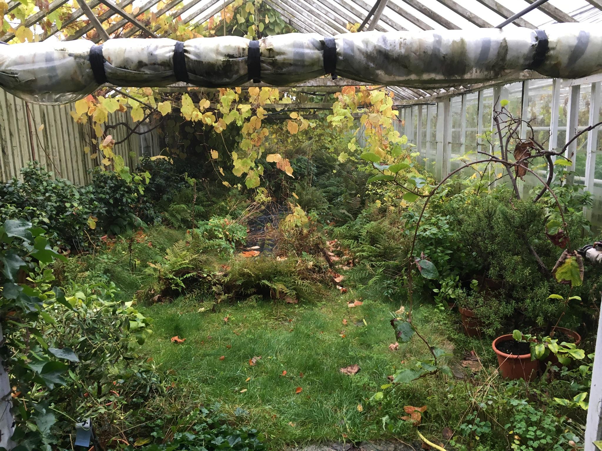 BÄCKDALENS - Handelsträdgård har ett vidunderligt läge ute på Bjärehalvön. Här odlar man tomater i mängder och bjuder på hembakat i det som en gång var ett stall. Caféverksamheten började som en lek men är i dag Bäckdalens kärna.På bilden ser ni ett av deras växthus, som vi denna tiden i mitten av Oktober har fått växa sig ifrån pedantiska små styrda fingrar, resultatet blir magisk.