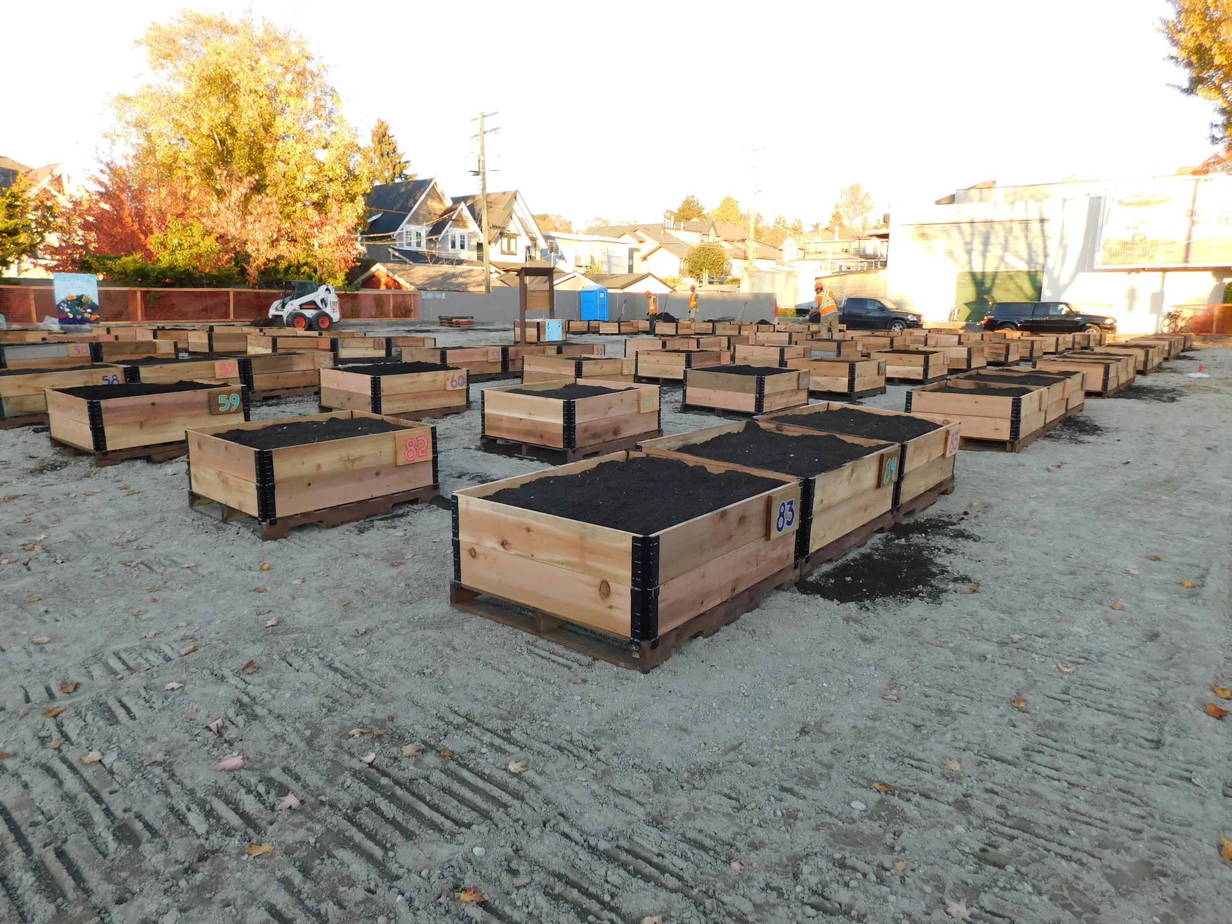4th_Macdonald_Vancouver_Community_Garden_Builders-0019.JPG