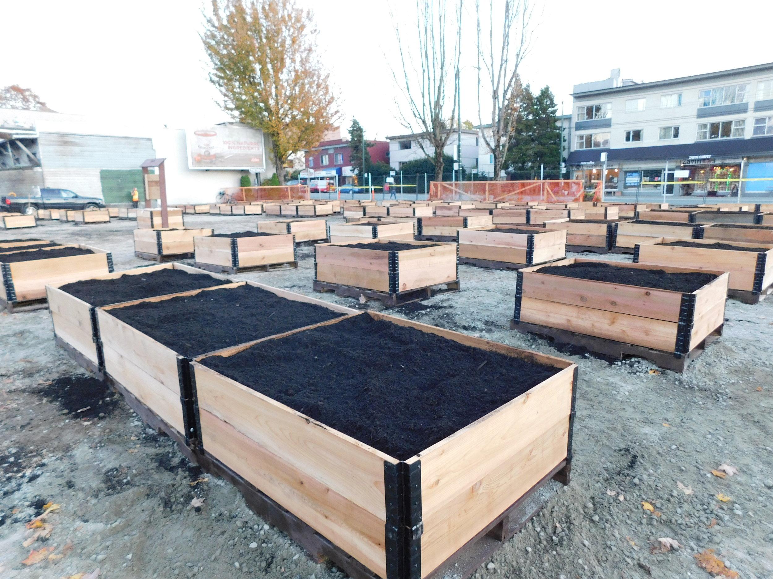 4th_Macdonald_Vancouver_Community_Garden_Builders-0021.JPG