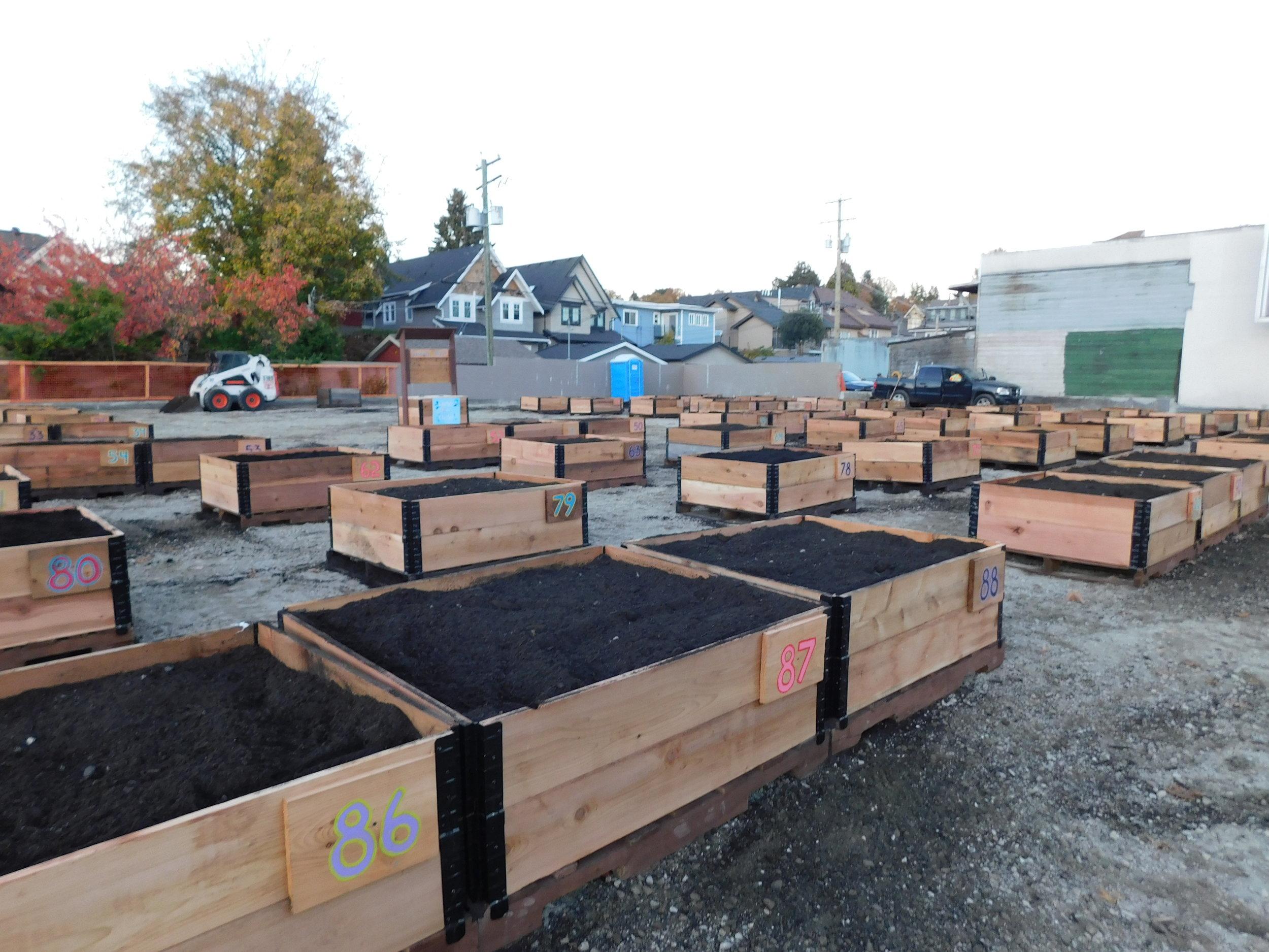 4th_Macdonald_Vancouver_Community_Garden_Builders-0024.JPG