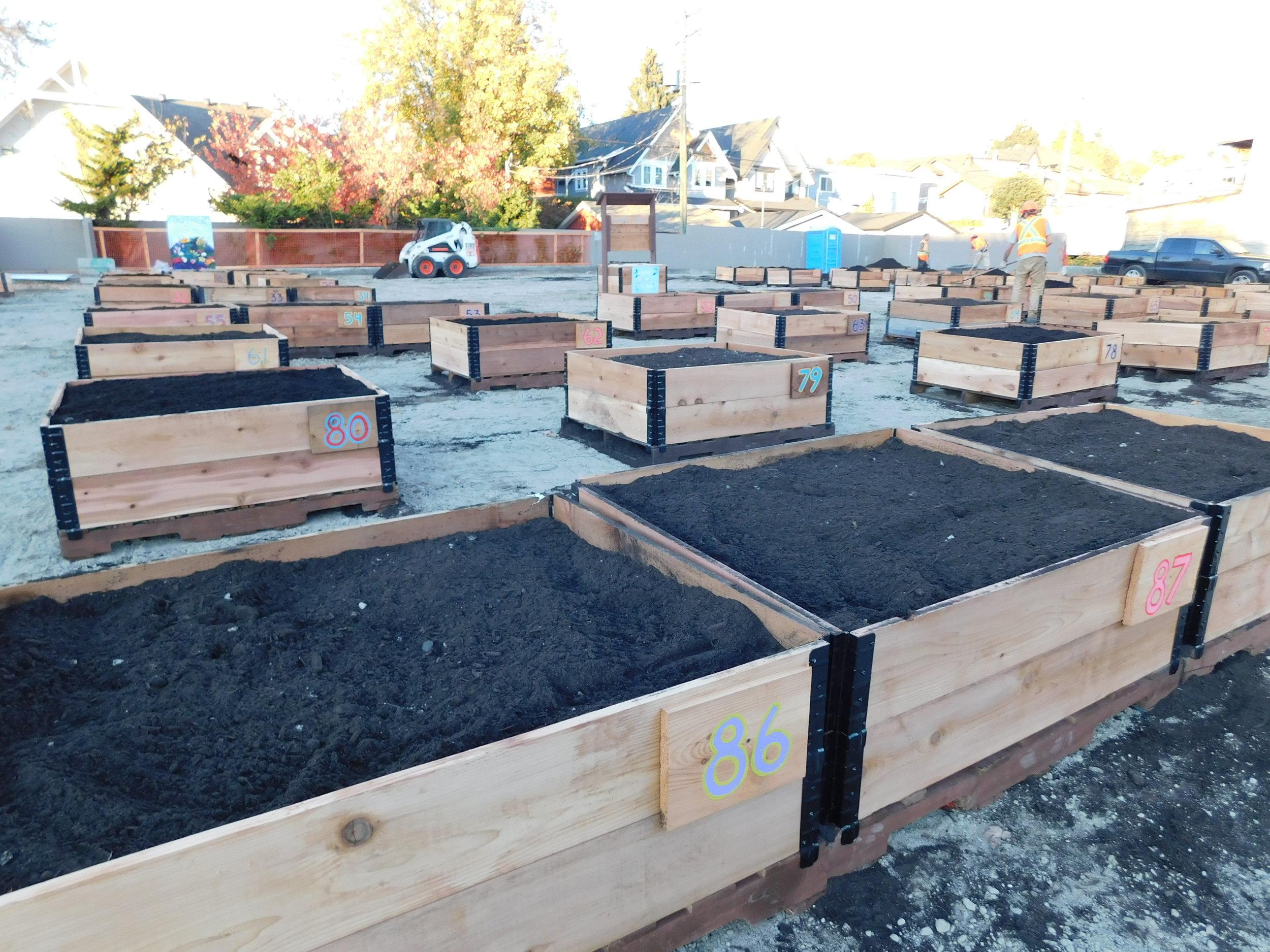 4th_Macdonald_Vancouver_Community_Garden_Builders-0020.JPG