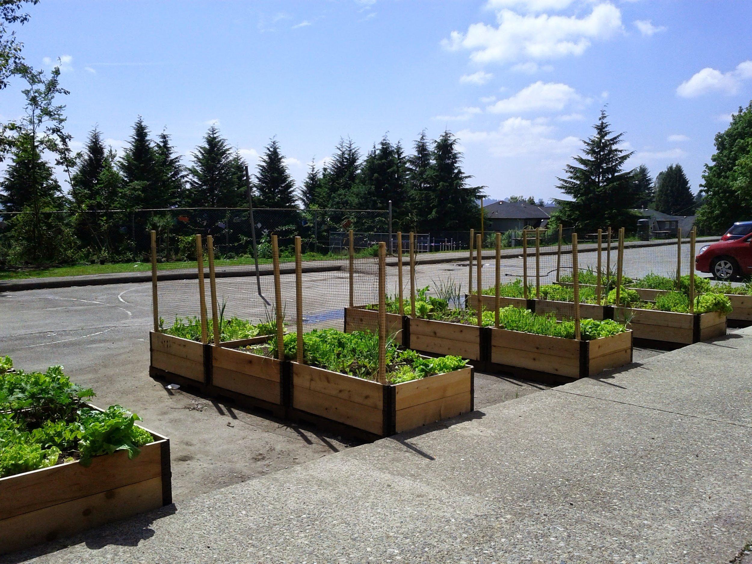 Community_Garden_Builders-Maillard_School_Garden