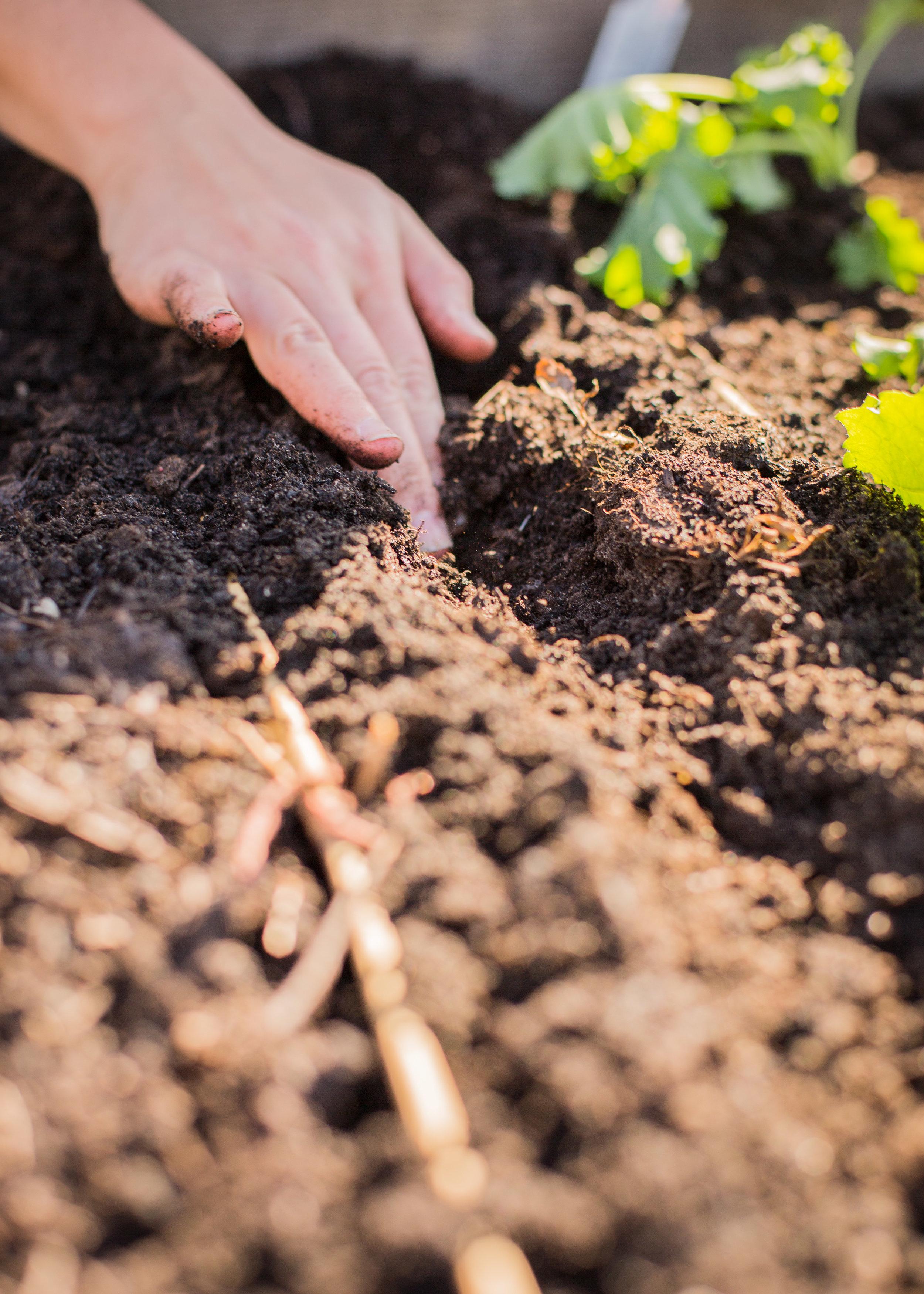 Raised_Garden_Bed_The_Drive_Temporary_Community_Garden_04.2016_Shifting_Growth_022.jpg