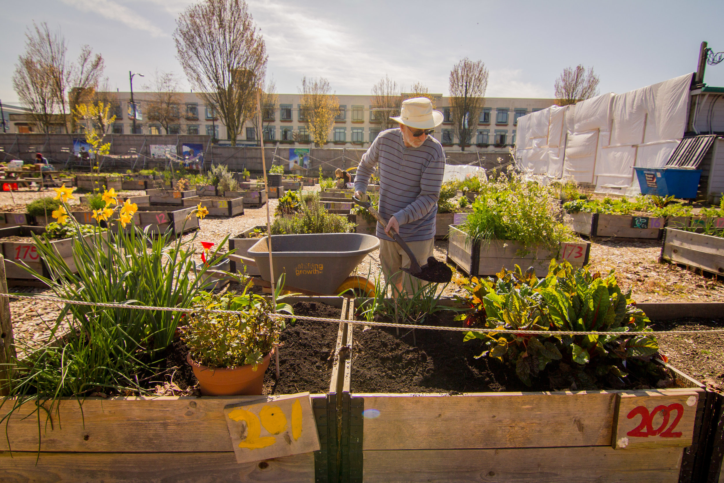 Raised_Garden_Bed_Hastings_North_Temporary_Community_Garden_04.2016_Shifting_Growth_79.jpg